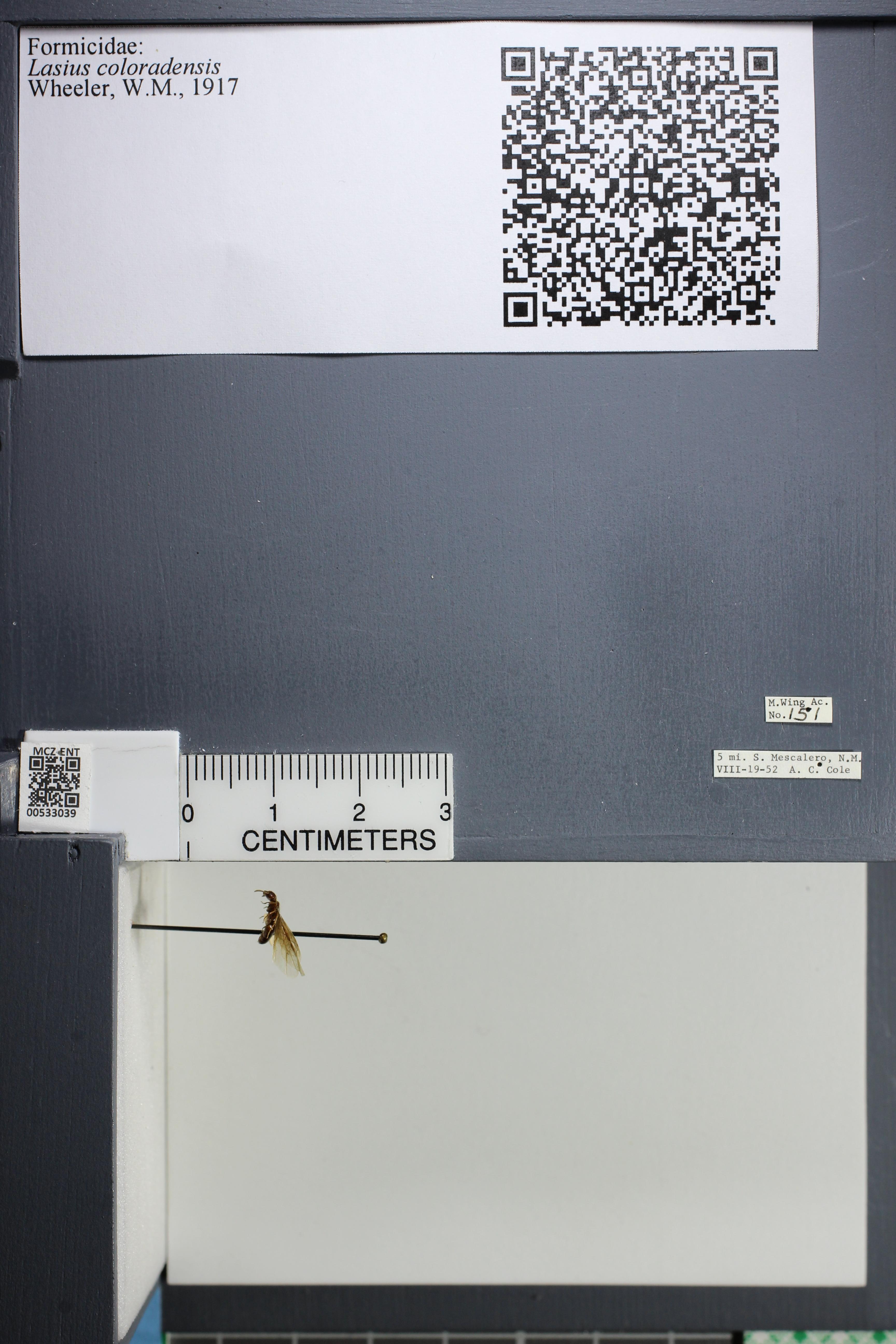 http://mczbase.mcz.harvard.edu/specimen_images/ent-formicidae/datashot/2014_09_09/IMG_304892.JPG