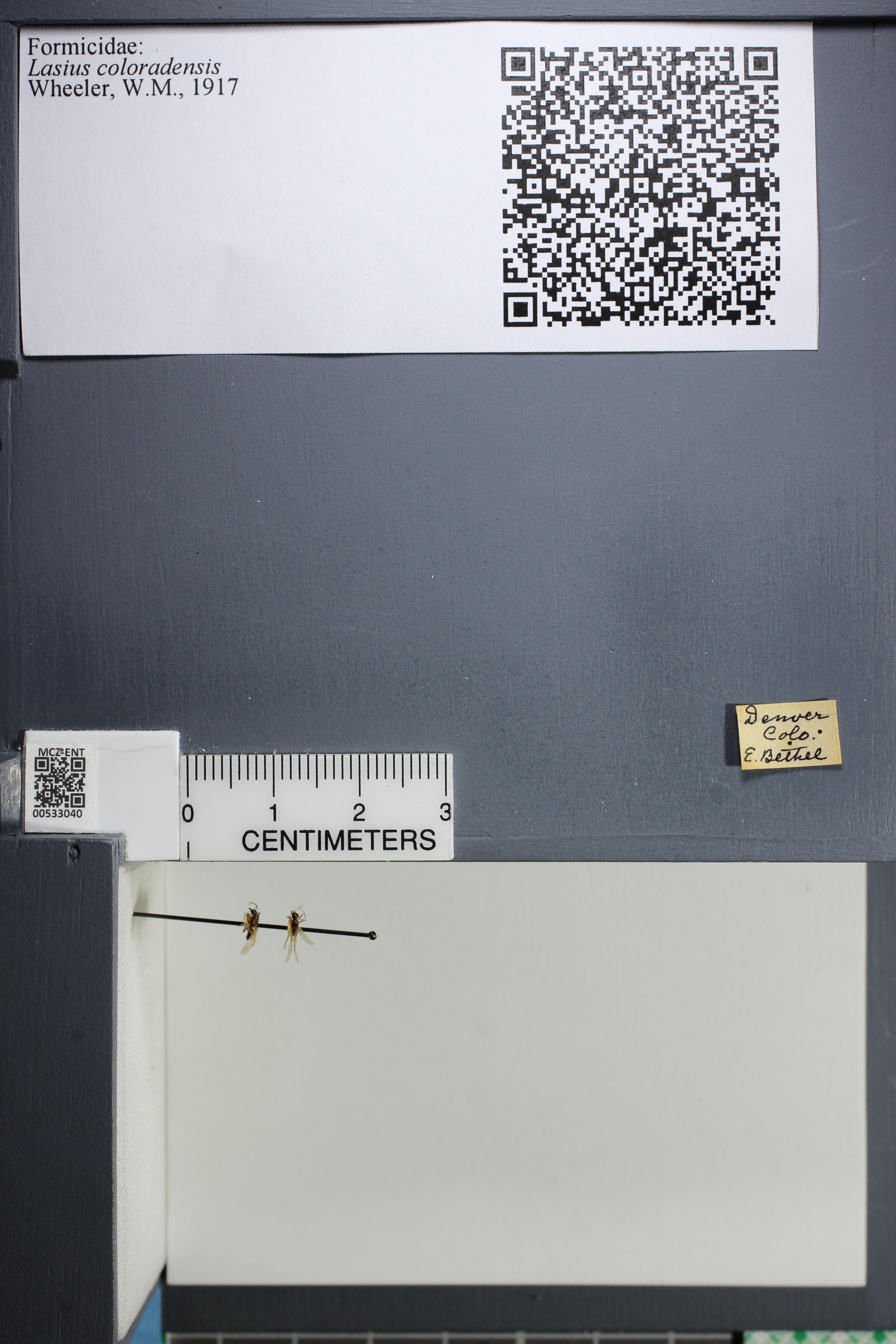 http://mczbase.mcz.harvard.edu/specimen_images/ent-formicidae/datashot/2014_09_09/IMG_304893.JPG
