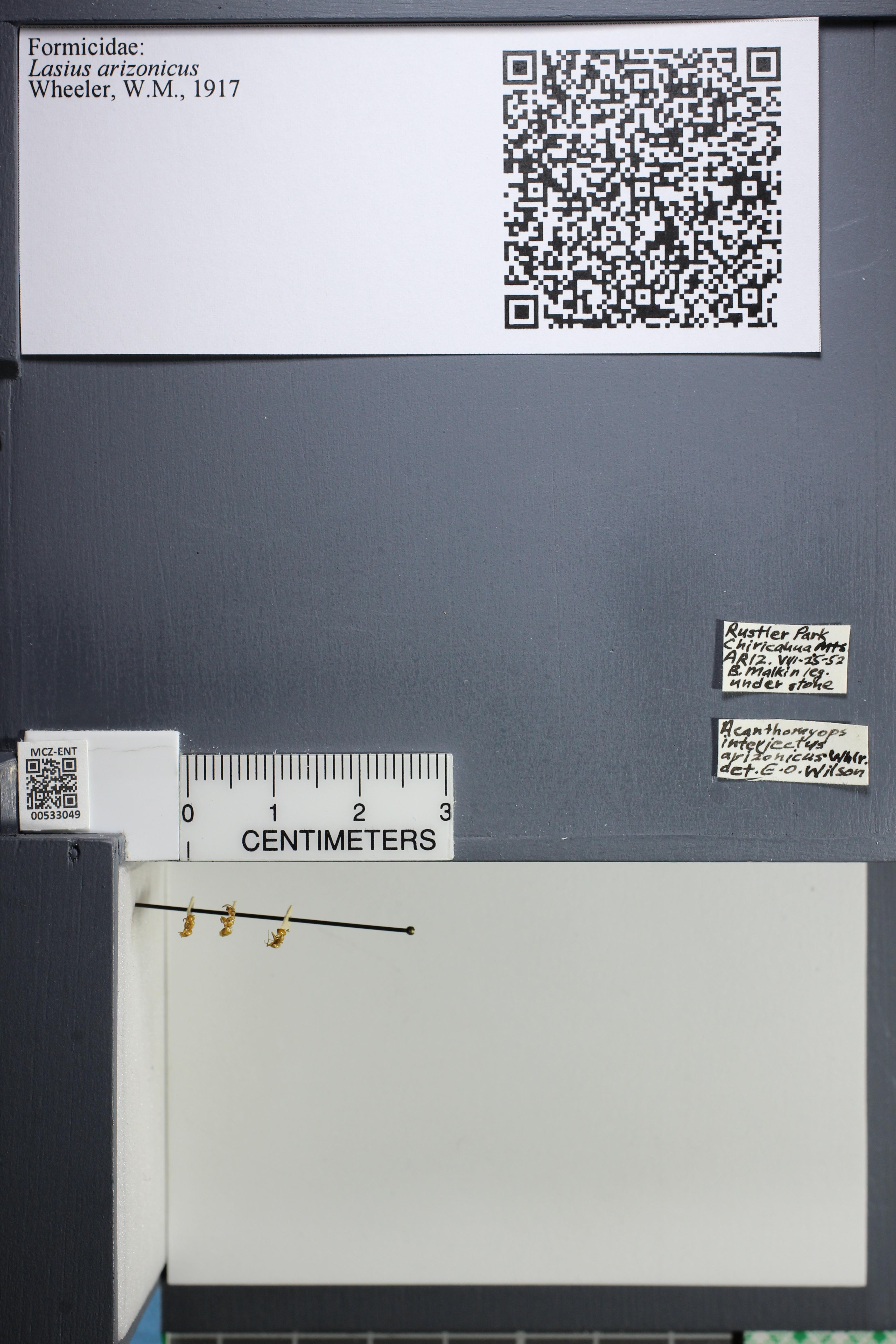 http://mczbase.mcz.harvard.edu/specimen_images/ent-formicidae/datashot/2014_09_09/IMG_304902.JPG