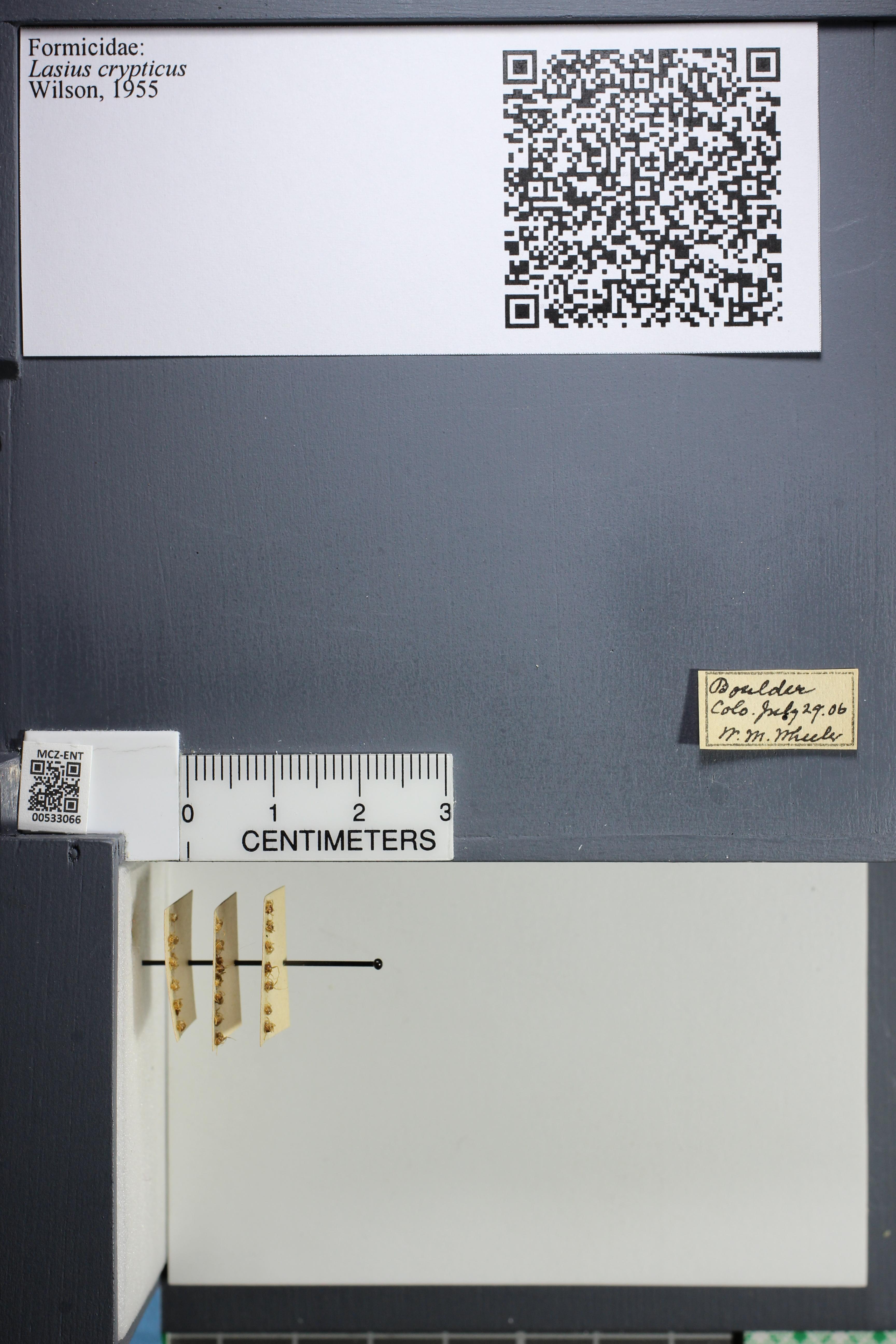http://mczbase.mcz.harvard.edu/specimen_images/ent-formicidae/datashot/2014_09_09/IMG_304920.JPG