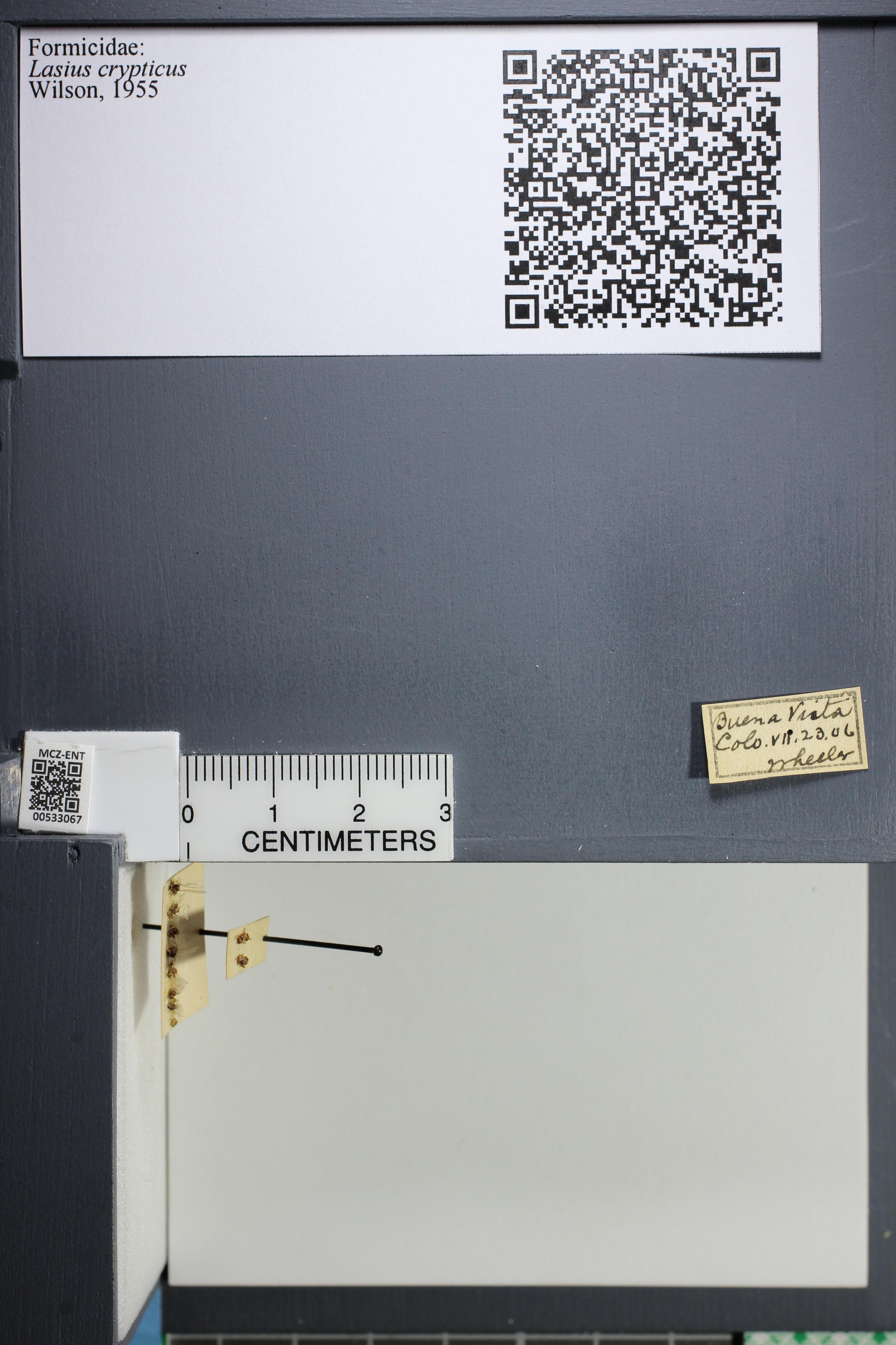 http://mczbase.mcz.harvard.edu/specimen_images/ent-formicidae/datashot/2014_09_09/IMG_304921.JPG