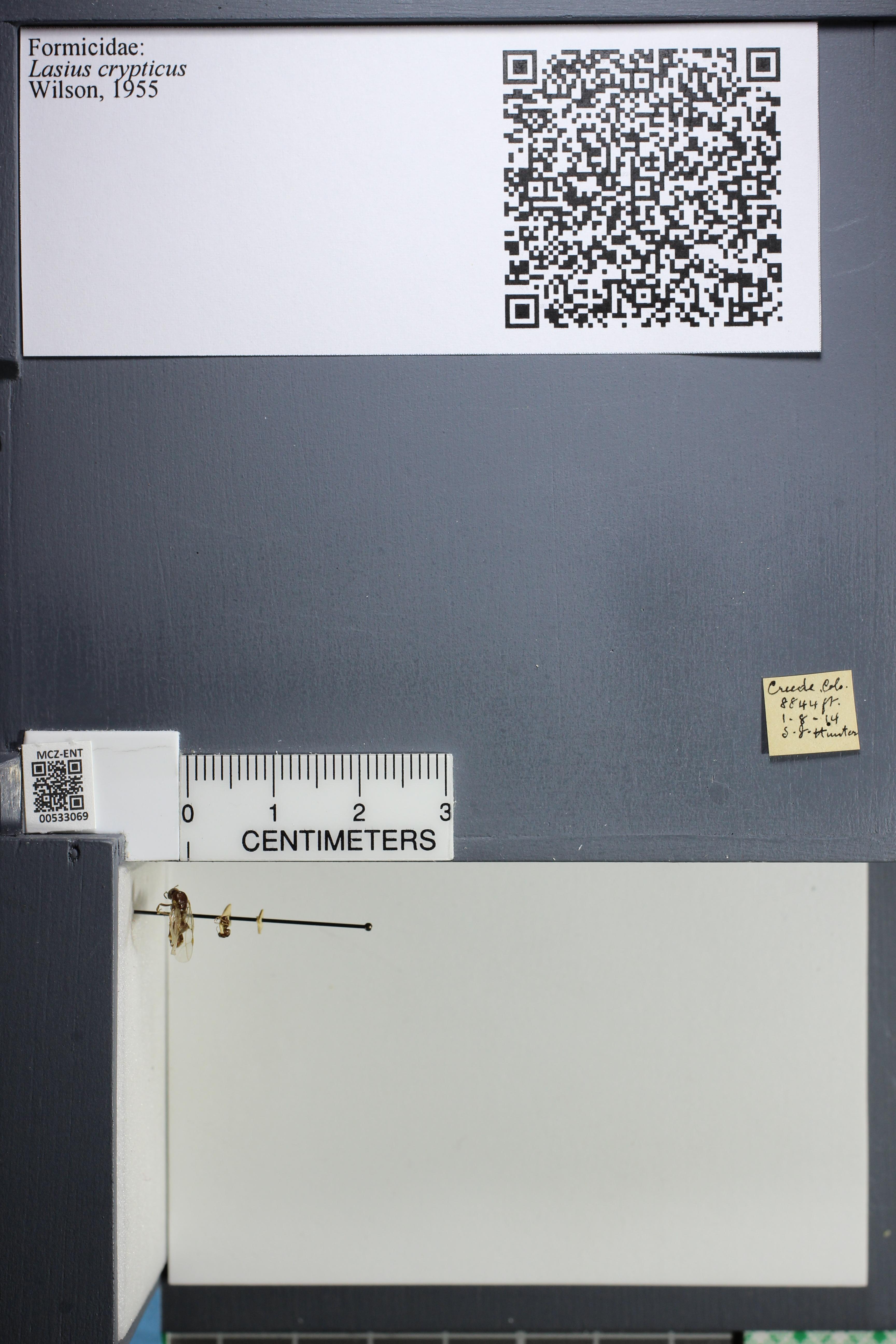 http://mczbase.mcz.harvard.edu/specimen_images/ent-formicidae/datashot/2014_09_09/IMG_304923.JPG