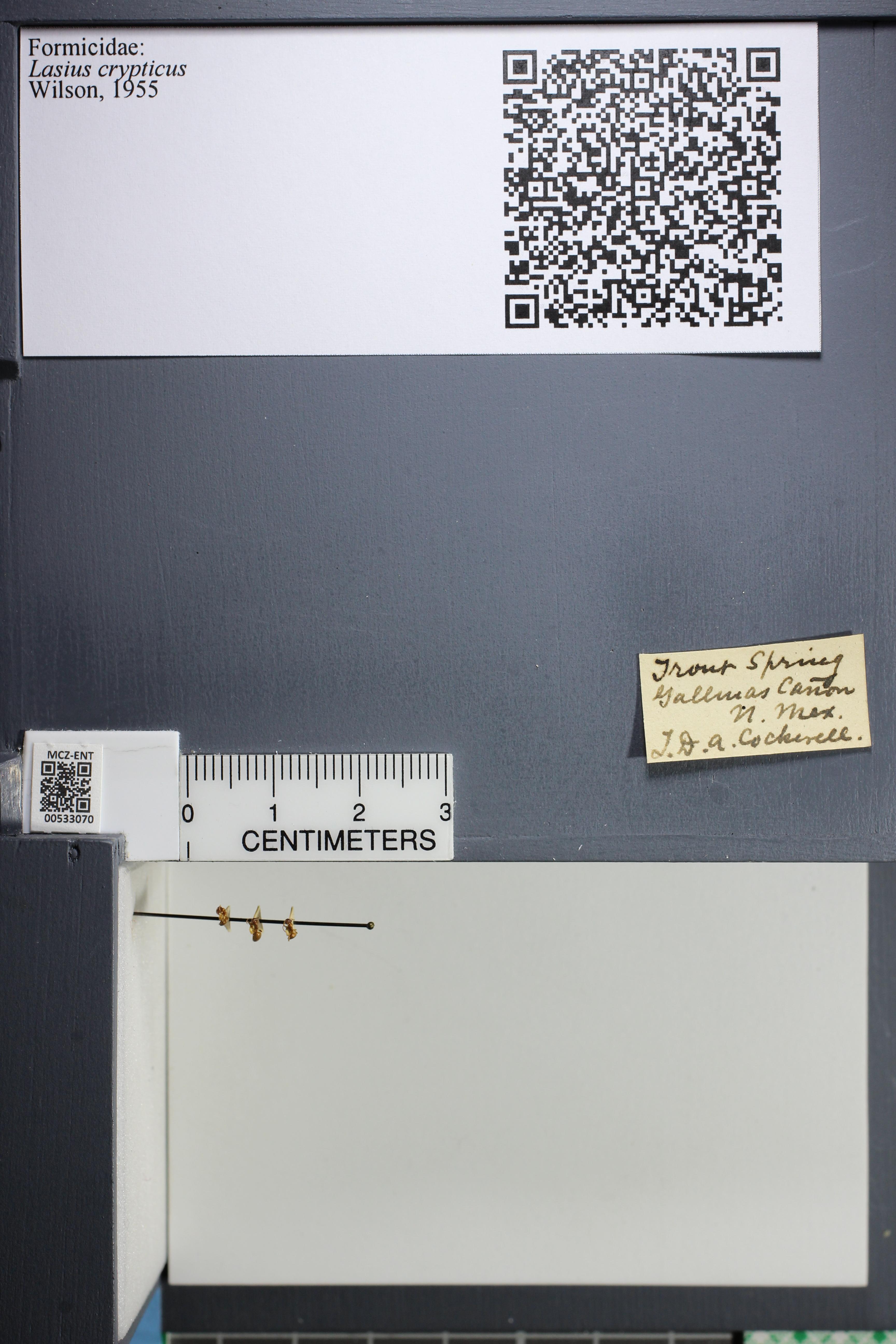 http://mczbase.mcz.harvard.edu/specimen_images/ent-formicidae/datashot/2014_09_09/IMG_304924.JPG