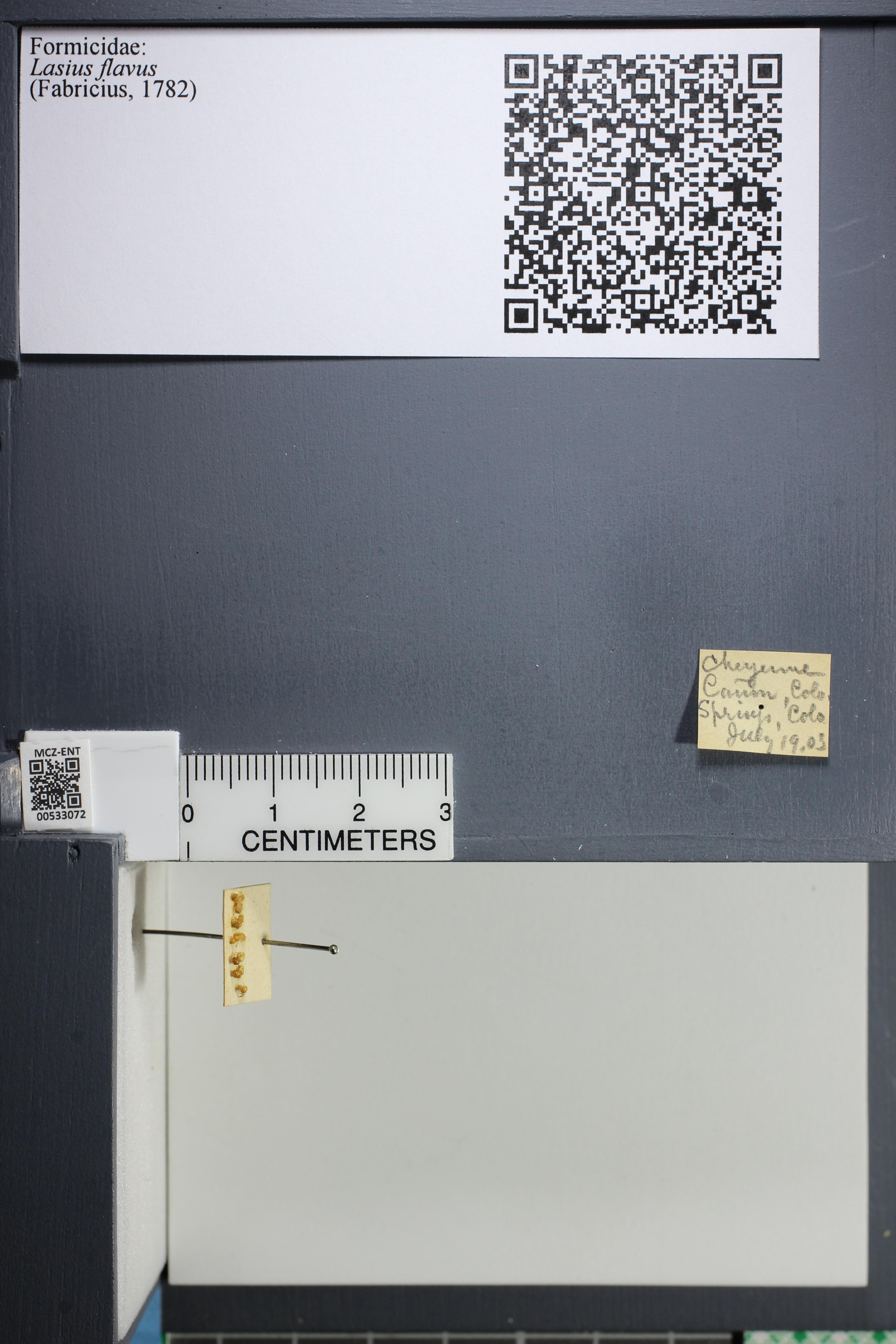 http://mczbase.mcz.harvard.edu/specimen_images/ent-formicidae/datashot/2014_09_09/IMG_304926.JPG