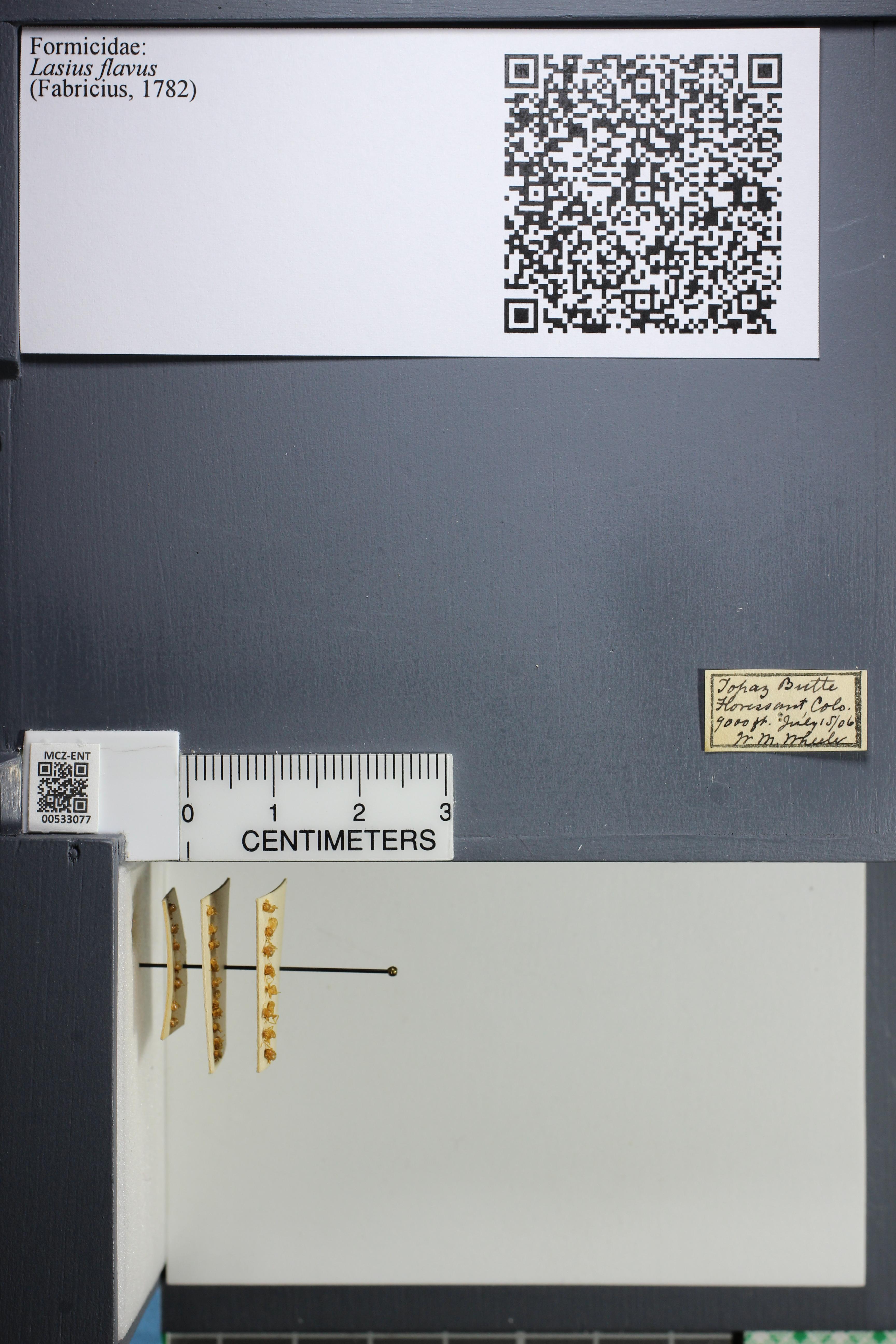 http://mczbase.mcz.harvard.edu/specimen_images/ent-formicidae/datashot/2014_09_09/IMG_304931.JPG