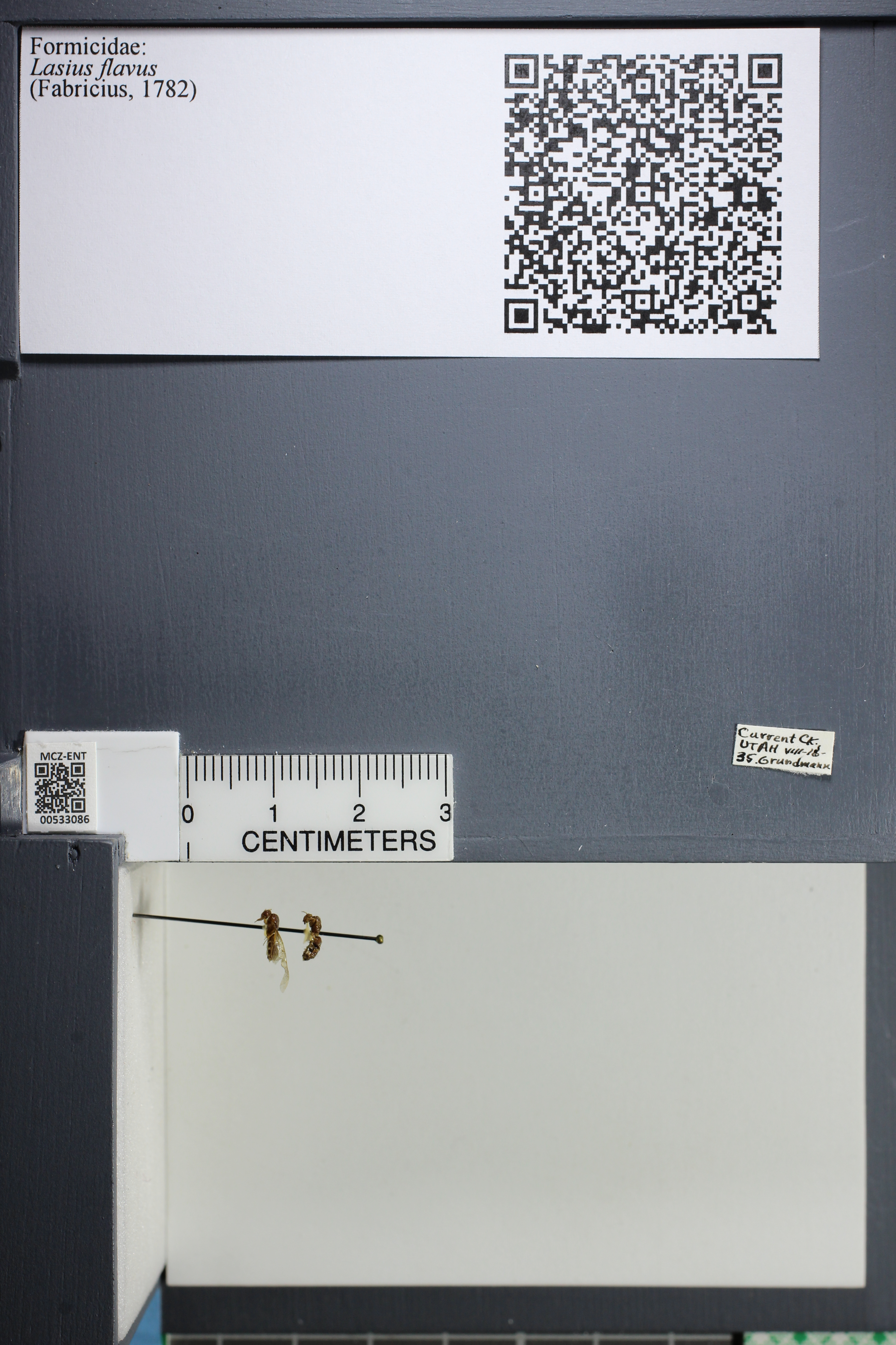 http://mczbase.mcz.harvard.edu/specimen_images/ent-formicidae/datashot/2014_09_09/IMG_304940.JPG