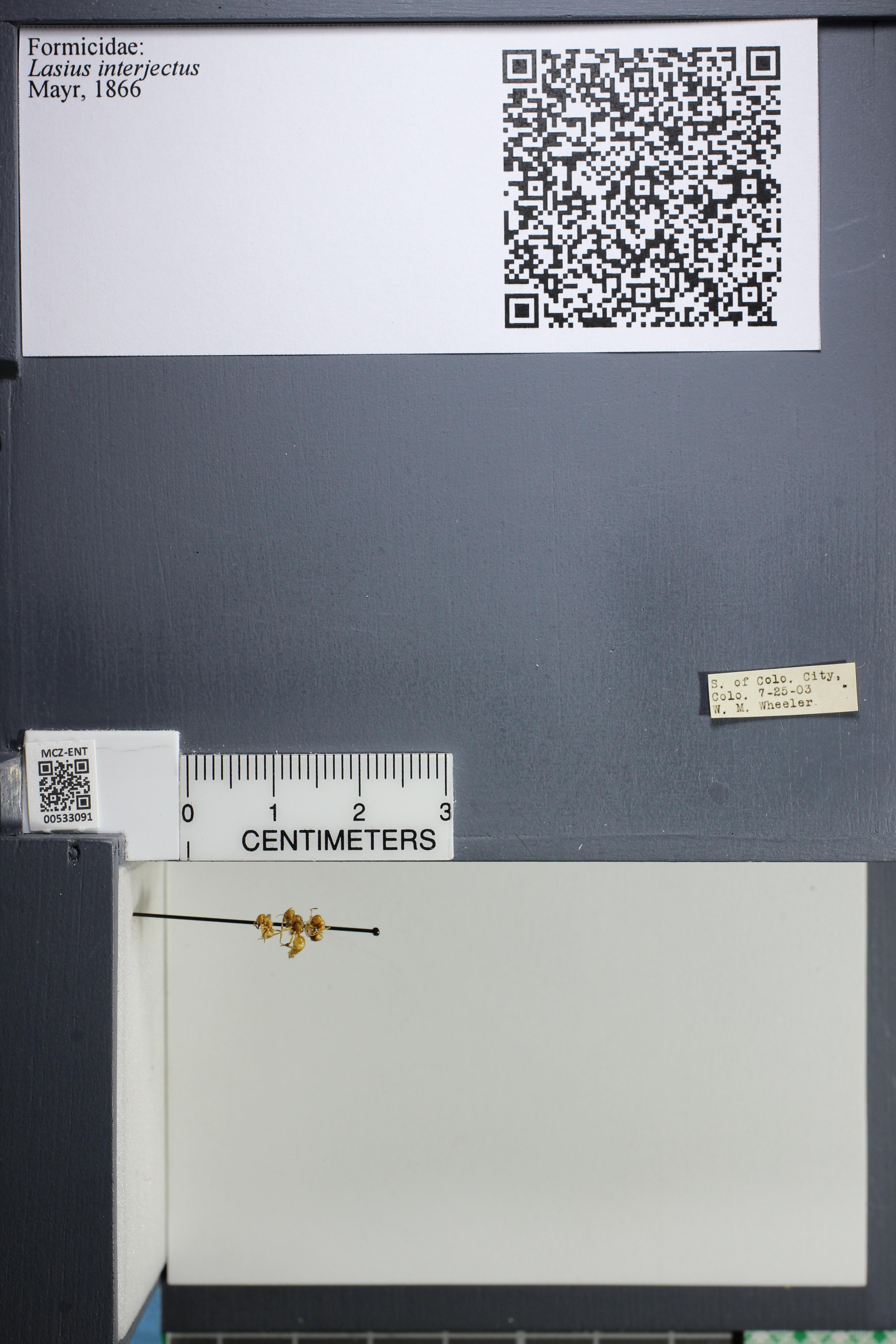 http://mczbase.mcz.harvard.edu/specimen_images/ent-formicidae/datashot/2014_09_09/IMG_304945.JPG