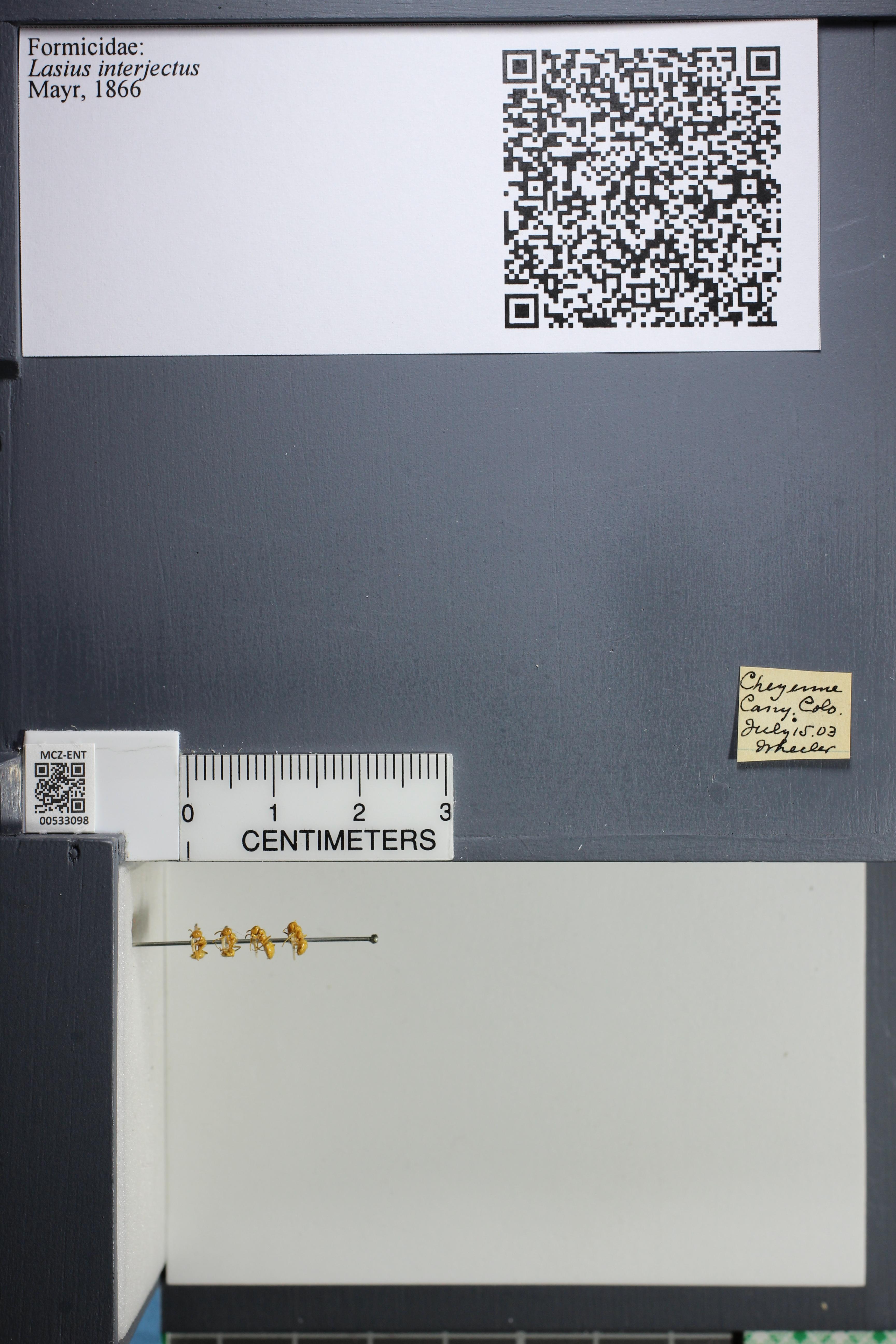 http://mczbase.mcz.harvard.edu/specimen_images/ent-formicidae/datashot/2014_09_09/IMG_304952.JPG