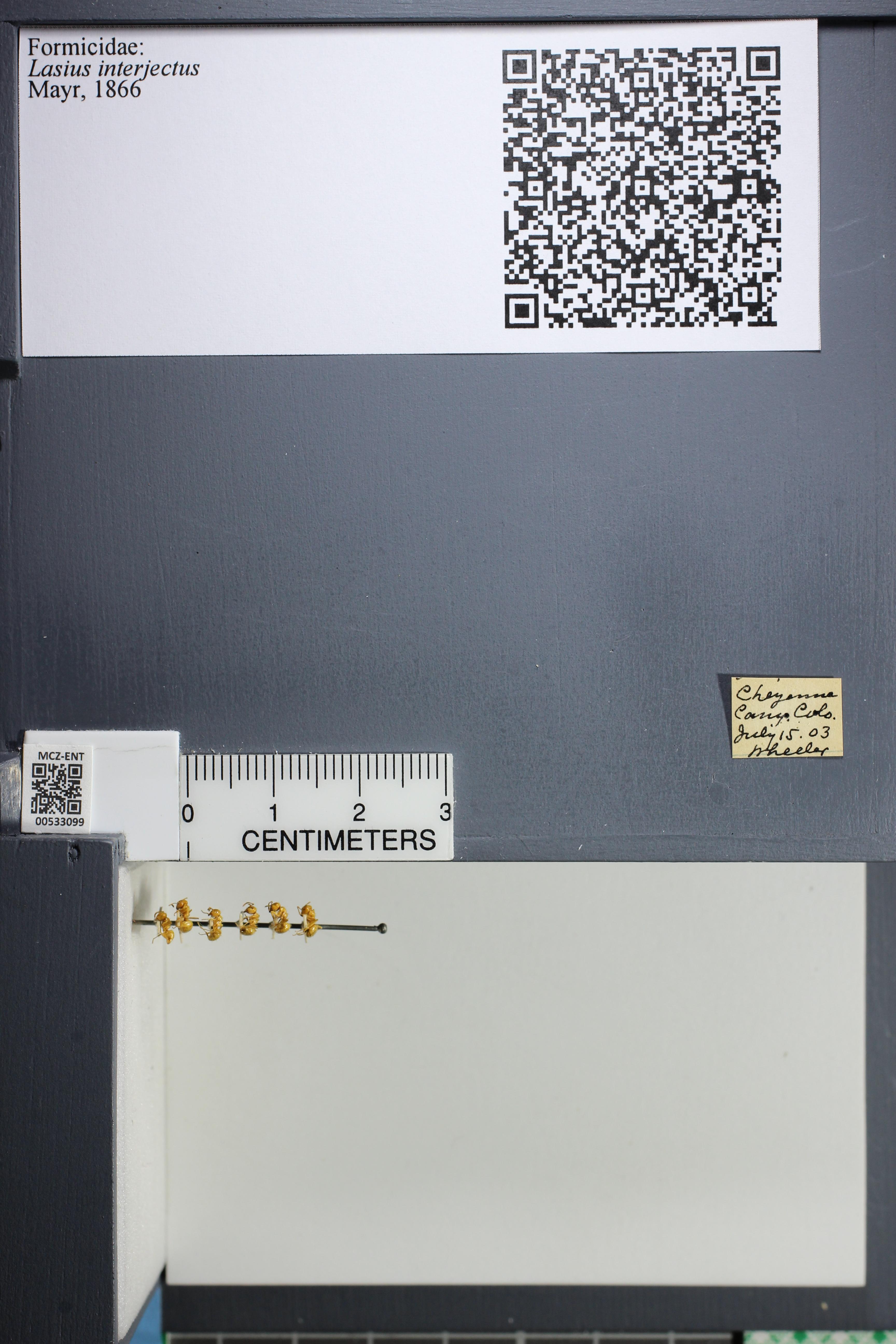 http://mczbase.mcz.harvard.edu/specimen_images/ent-formicidae/datashot/2014_09_09/IMG_304953.JPG