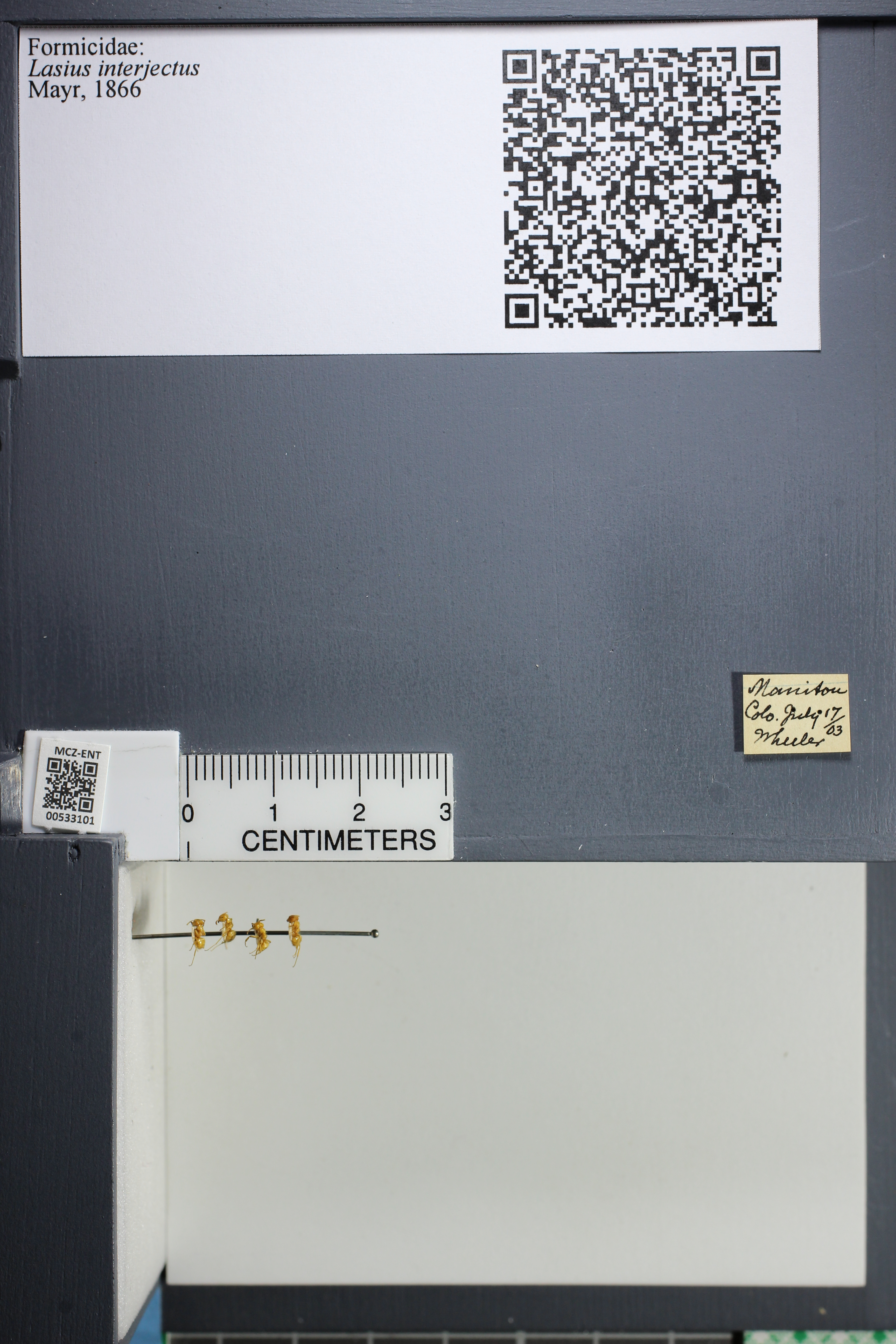 http://mczbase.mcz.harvard.edu/specimen_images/ent-formicidae/datashot/2014_09_09/IMG_304955.JPG