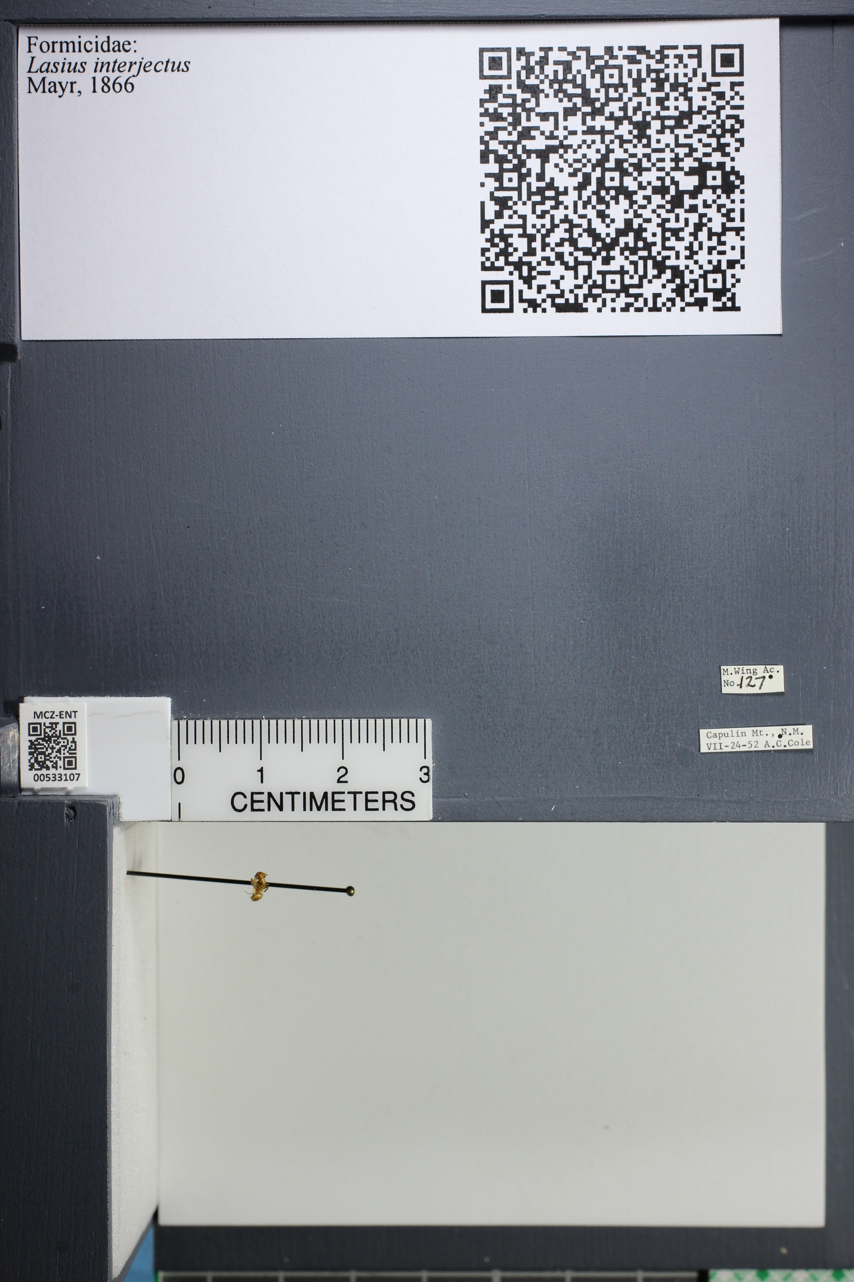 http://mczbase.mcz.harvard.edu/specimen_images/ent-formicidae/datashot/2014_09_09/IMG_304961.JPG