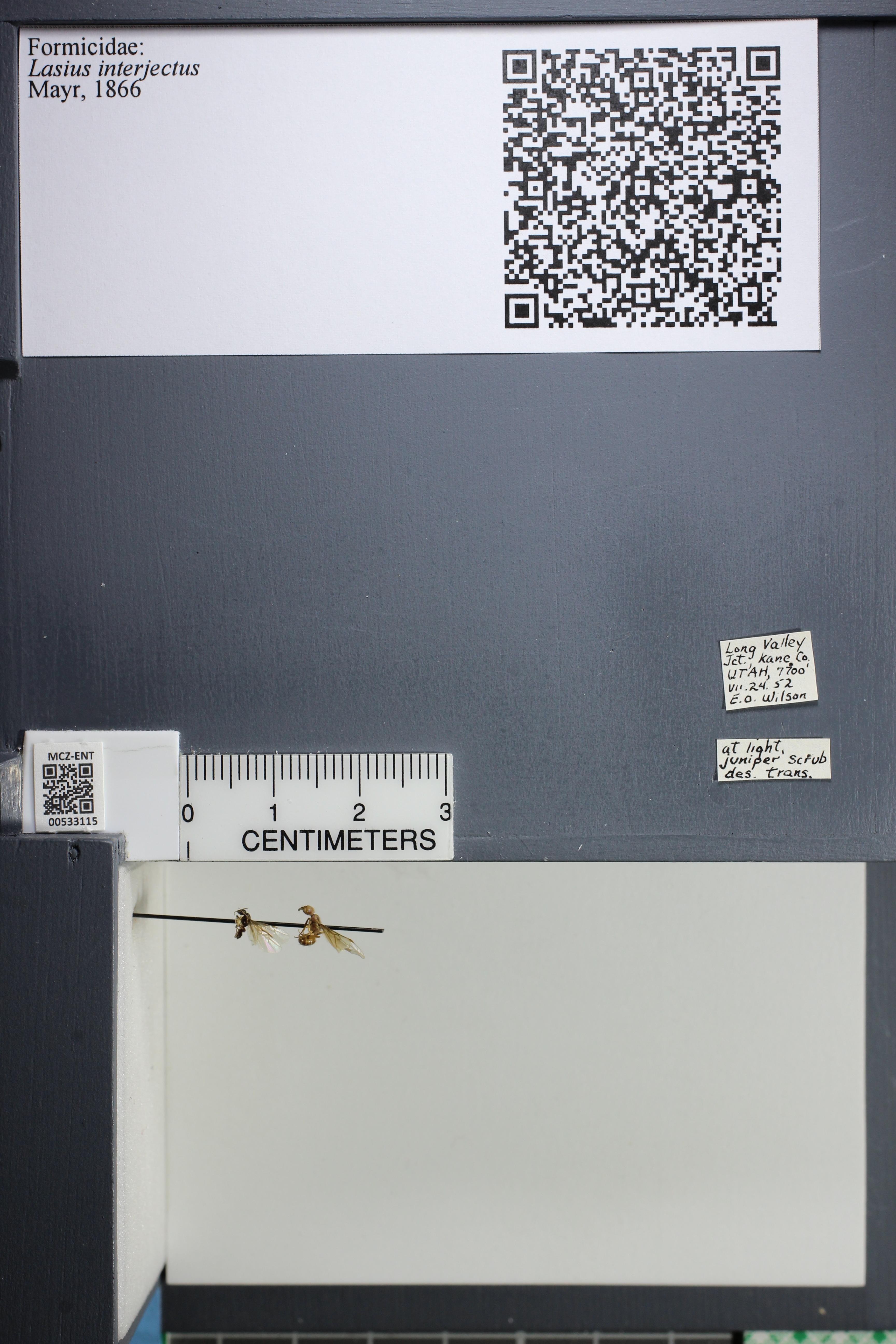 http://mczbase.mcz.harvard.edu/specimen_images/ent-formicidae/datashot/2014_09_09/IMG_304969.JPG