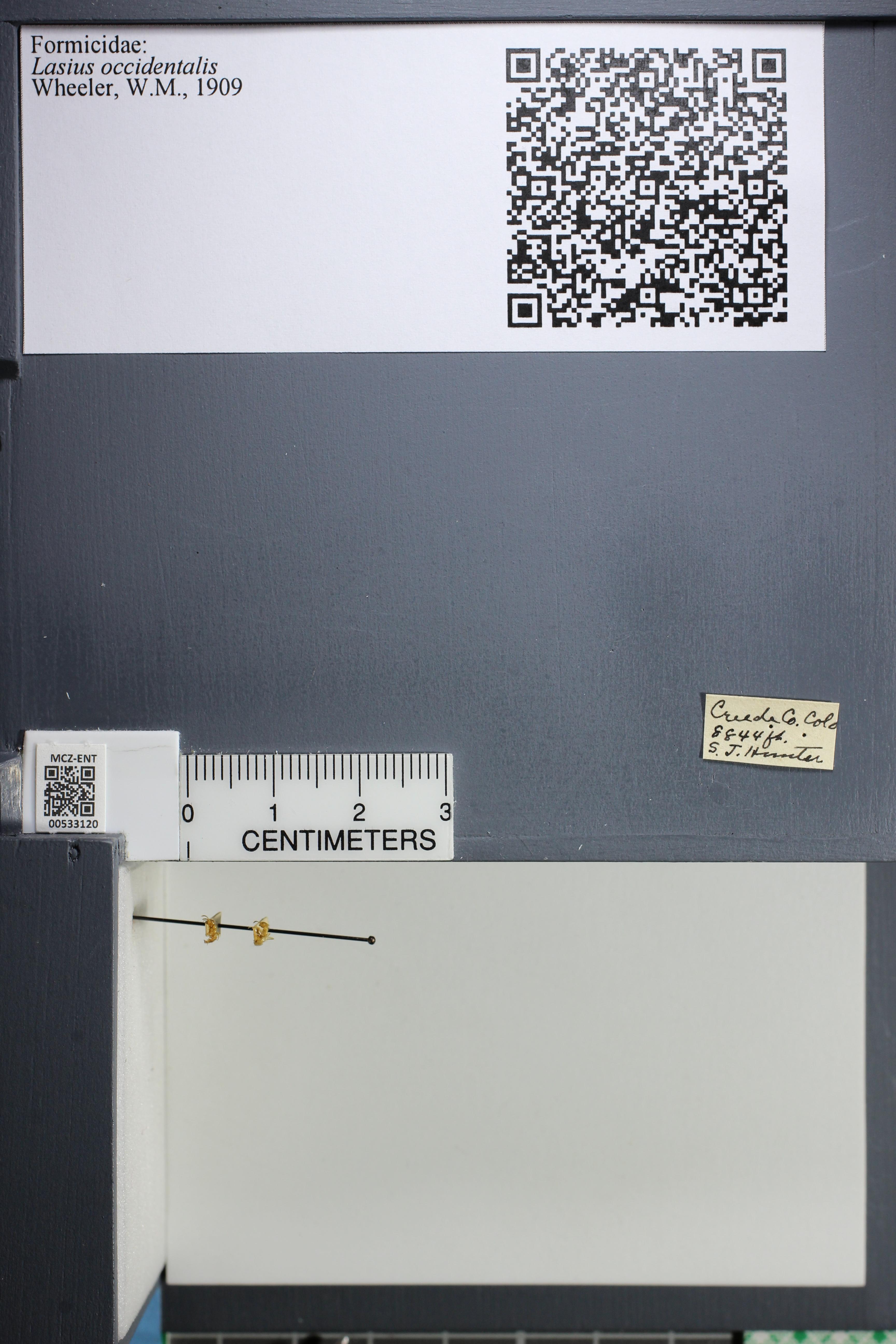 http://mczbase.mcz.harvard.edu/specimen_images/ent-formicidae/datashot/2014_09_09/IMG_304974.JPG