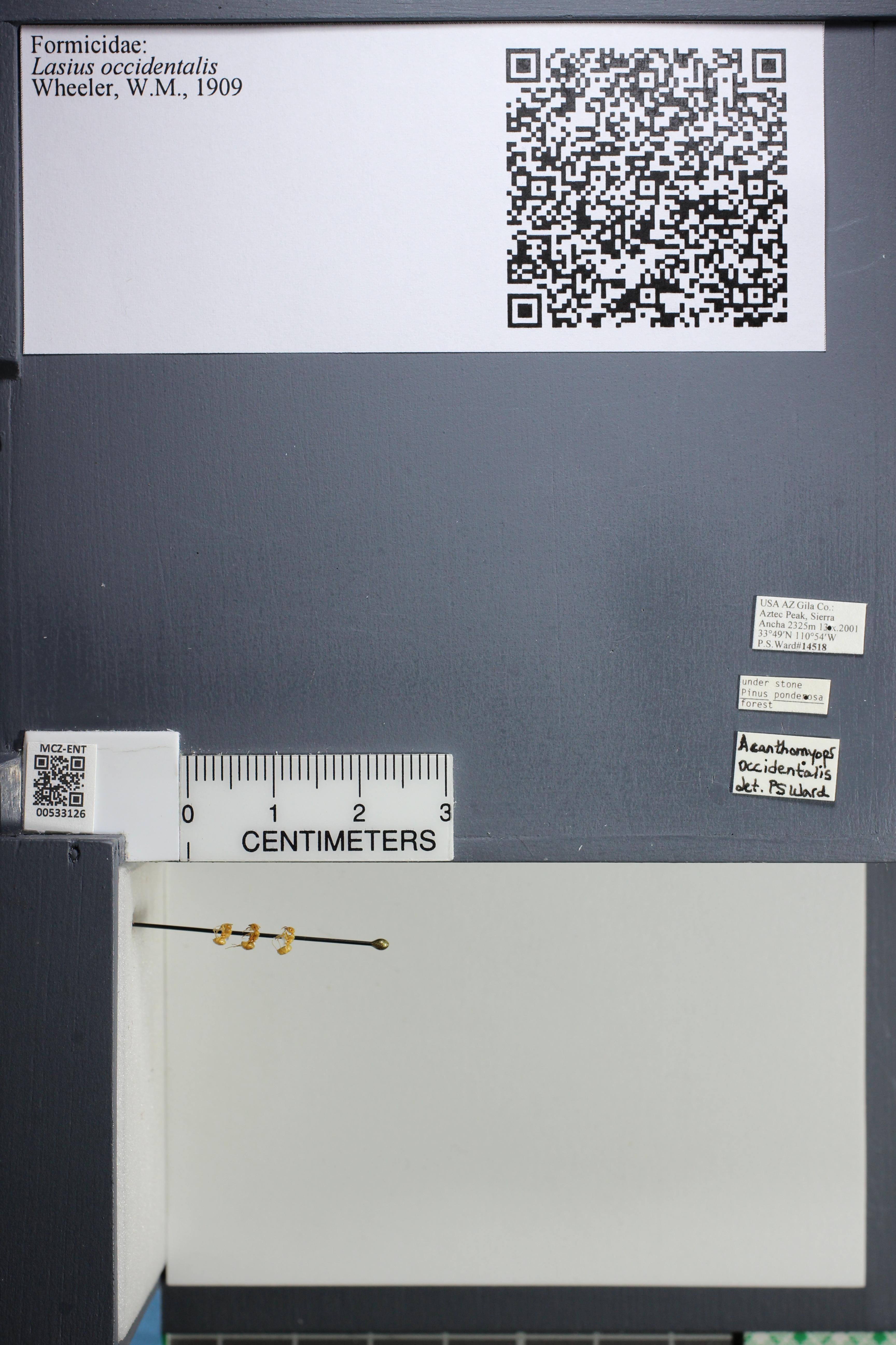 http://mczbase.mcz.harvard.edu/specimen_images/ent-formicidae/datashot/2014_09_09/IMG_304980.JPG
