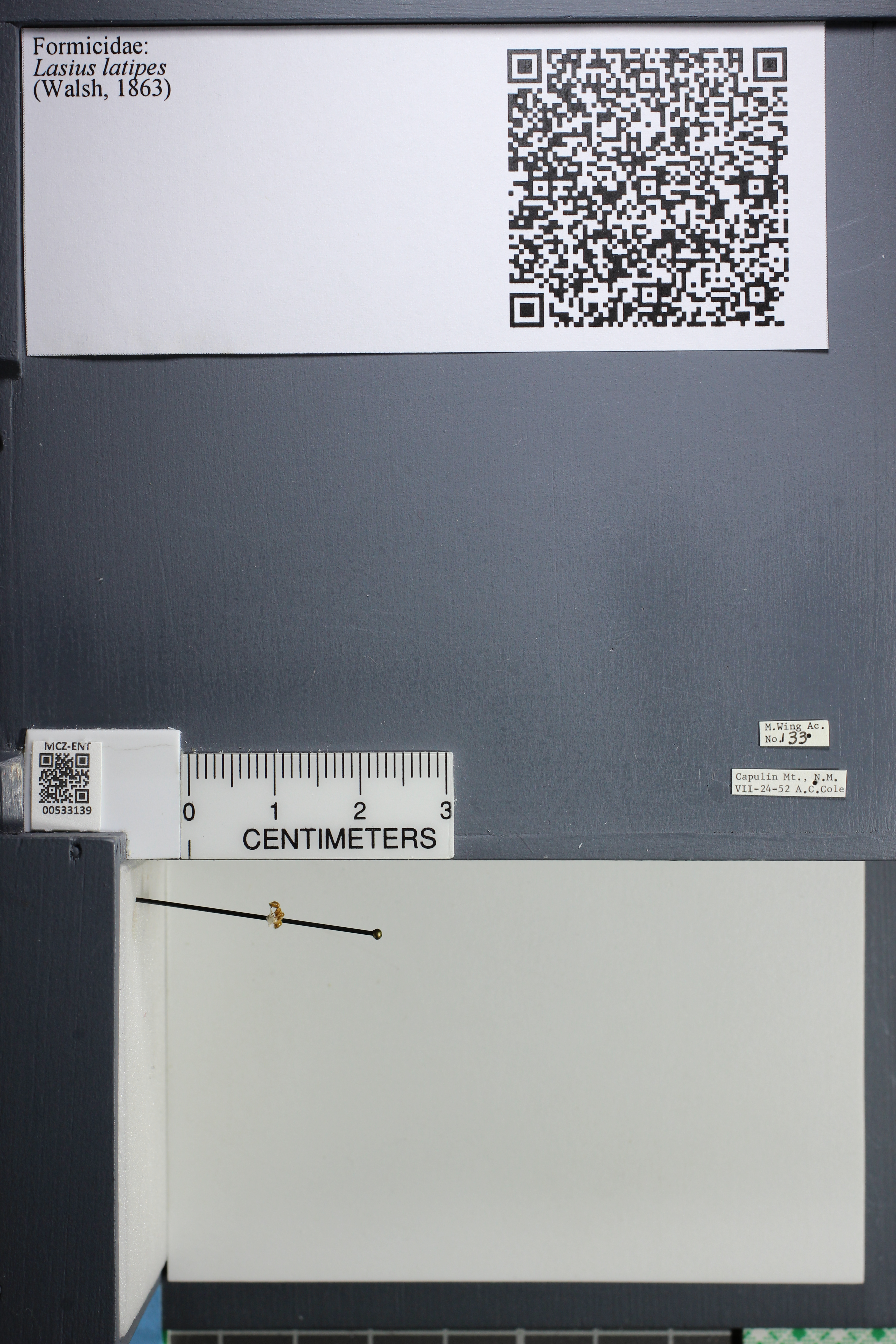 http://mczbase.mcz.harvard.edu/specimen_images/ent-formicidae/datashot/2014_09_10/IMG_304993.JPG