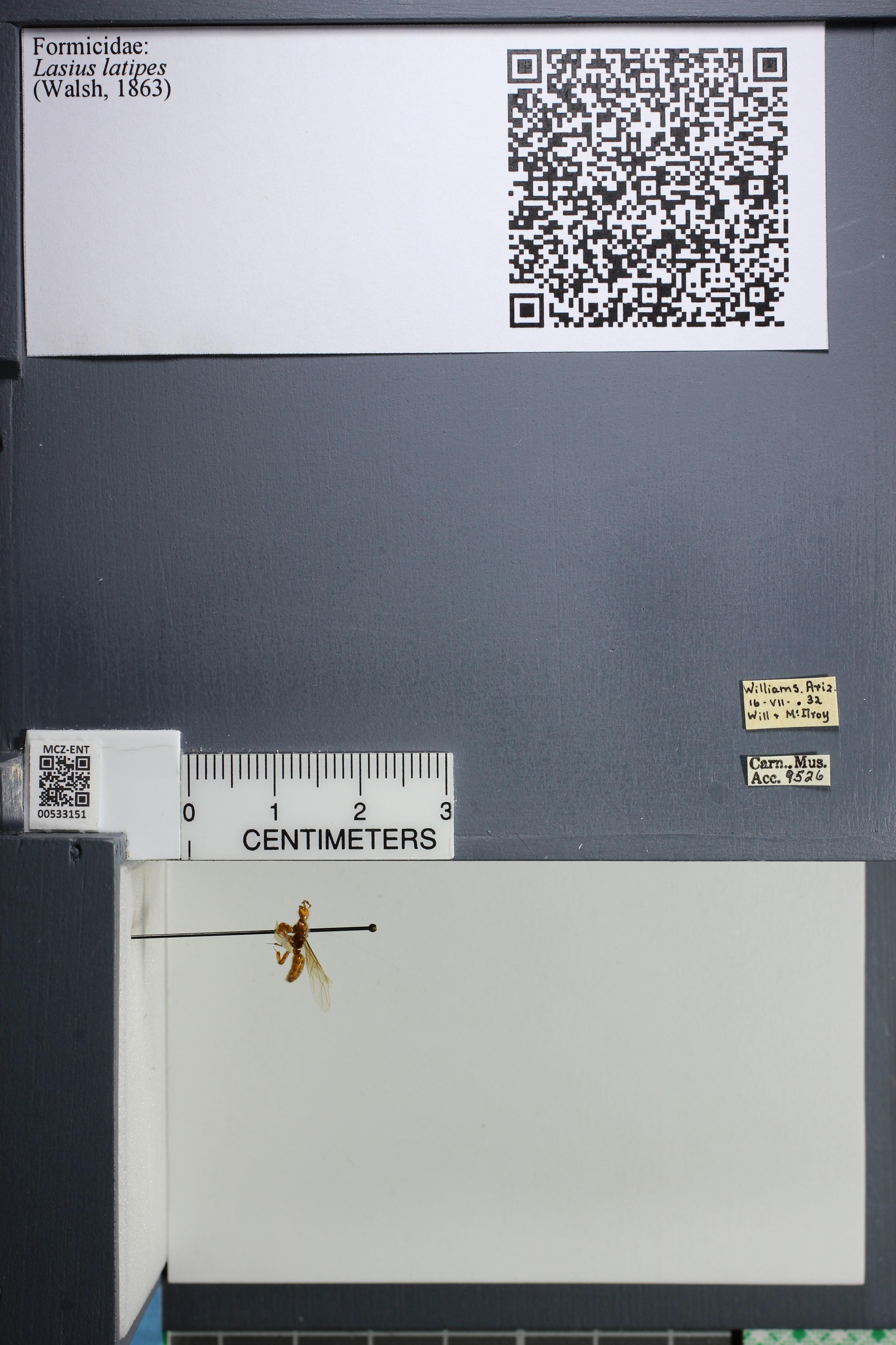 http://mczbase.mcz.harvard.edu/specimen_images/ent-formicidae/datashot/2014_09_10/IMG_305005.JPG
