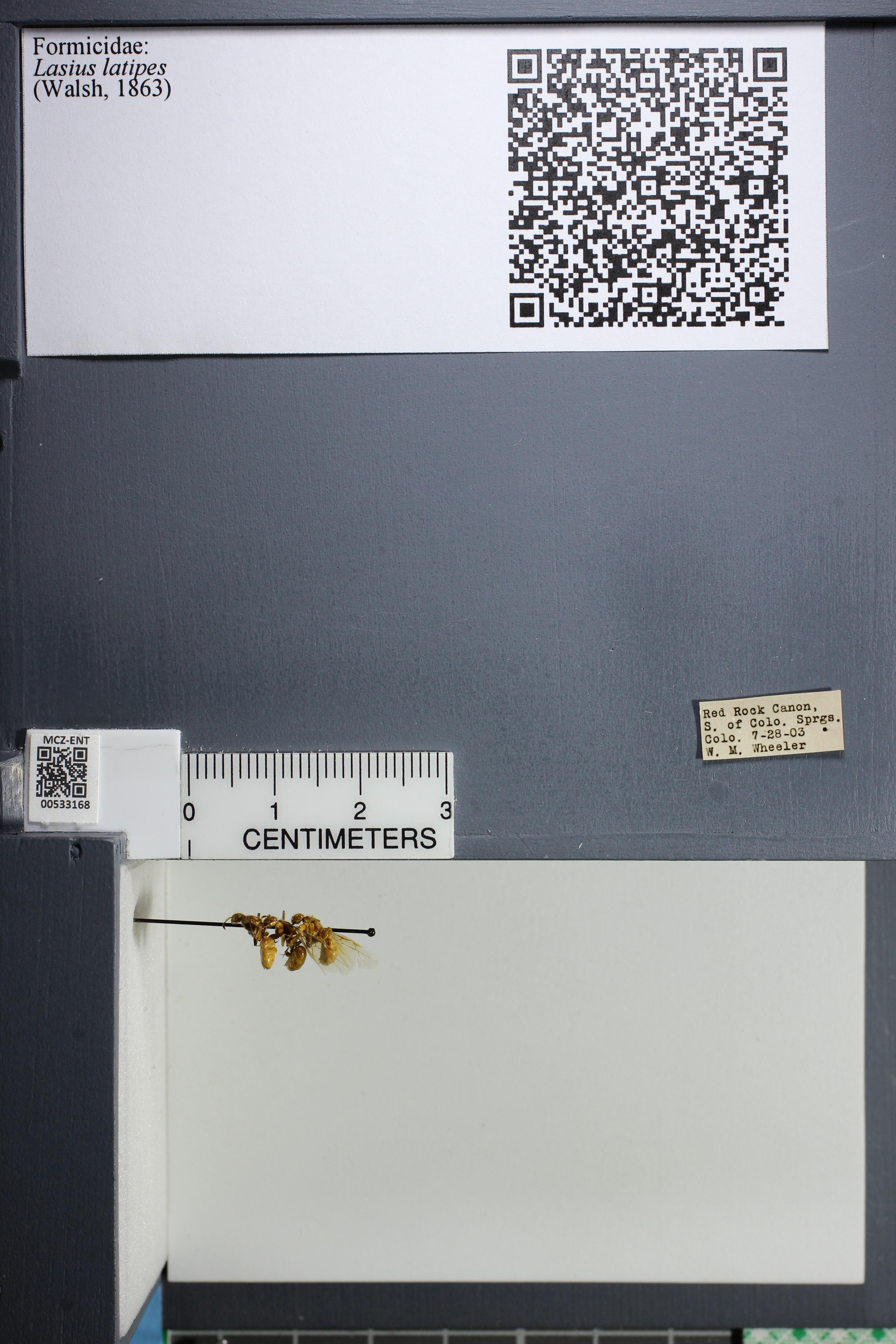 http://mczbase.mcz.harvard.edu/specimen_images/ent-formicidae/datashot/2014_09_10/IMG_305022.JPG