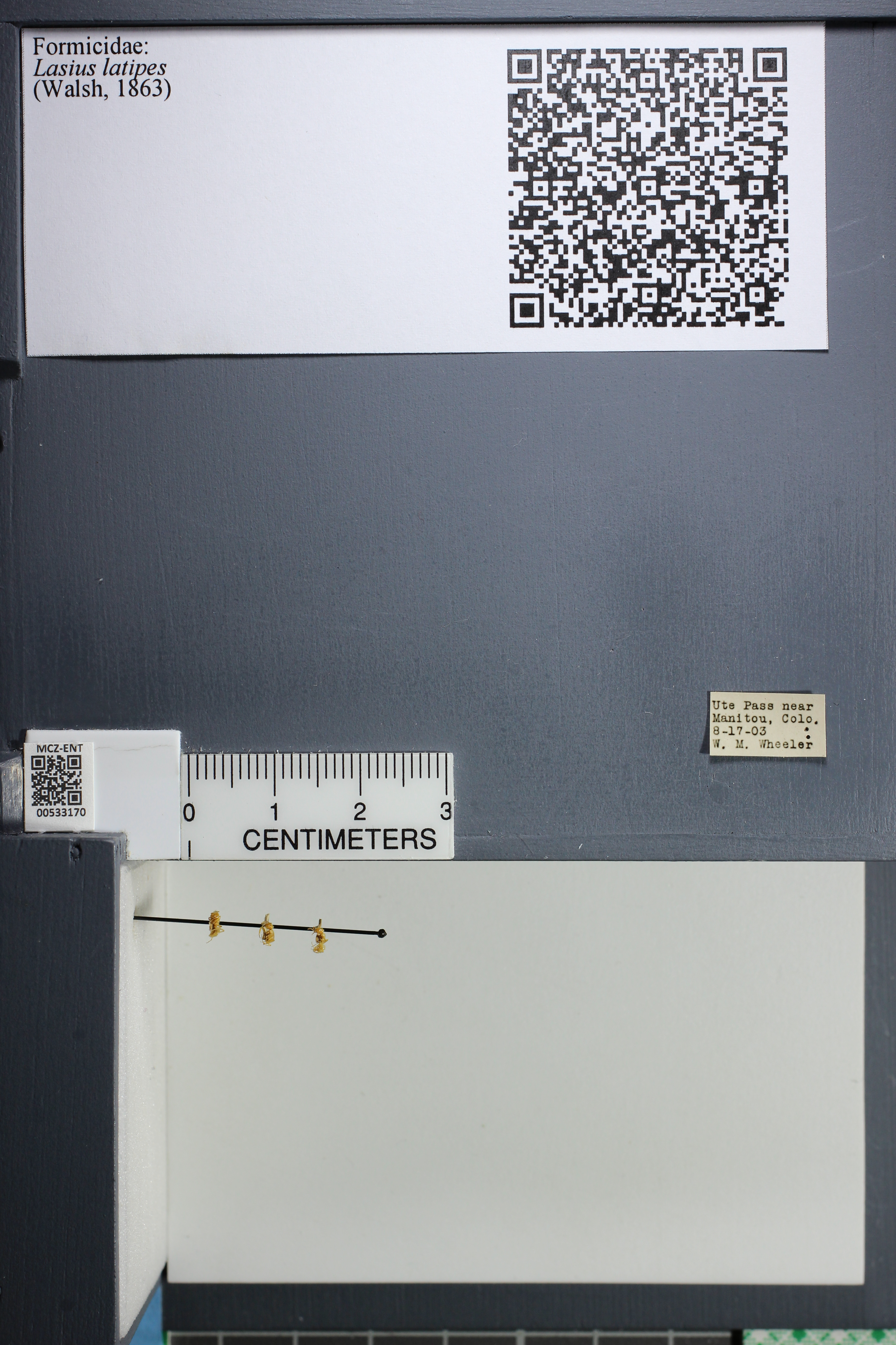 http://mczbase.mcz.harvard.edu/specimen_images/ent-formicidae/datashot/2014_09_10/IMG_305024.JPG
