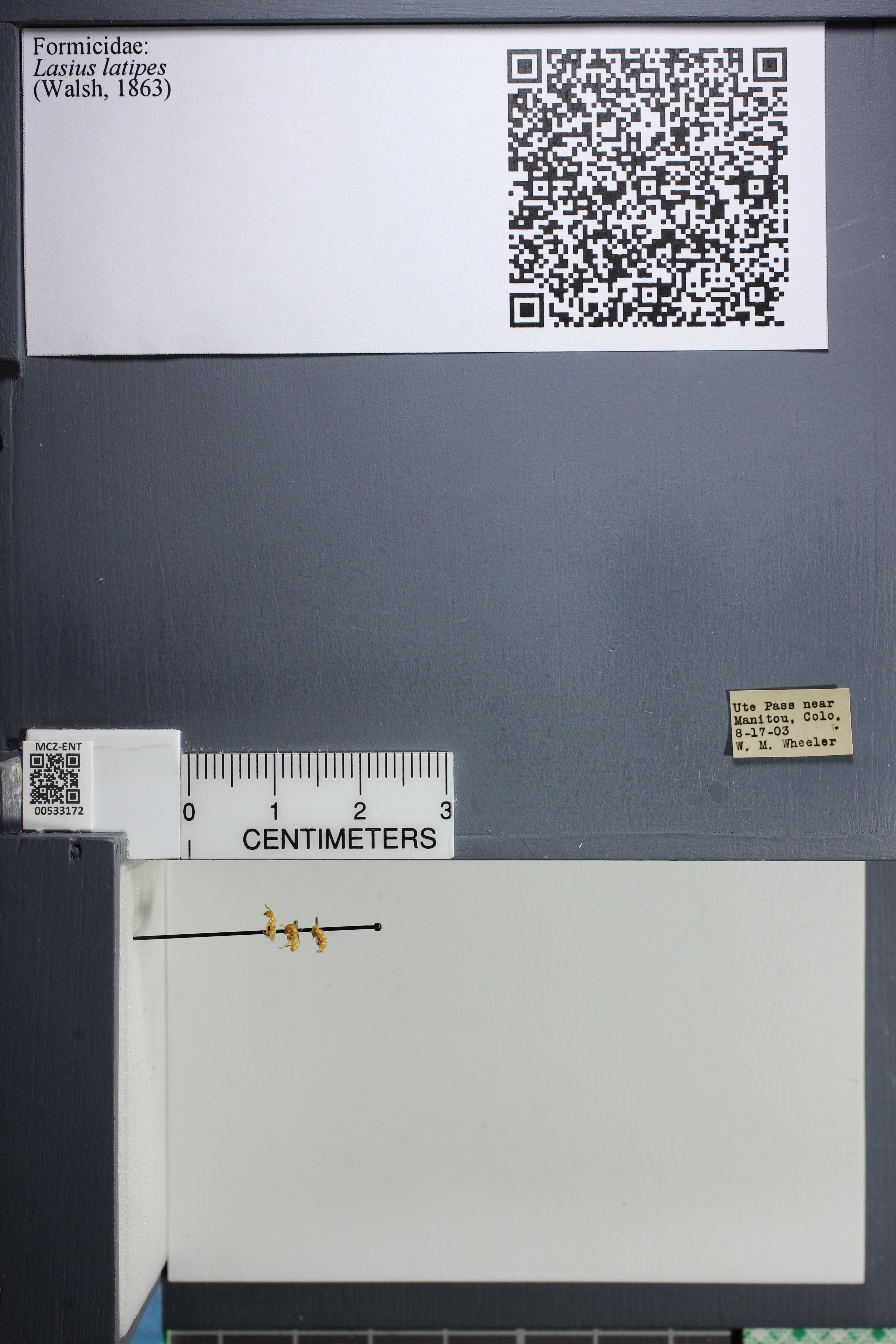 http://mczbase.mcz.harvard.edu/specimen_images/ent-formicidae/datashot/2014_09_10/IMG_305027.JPG