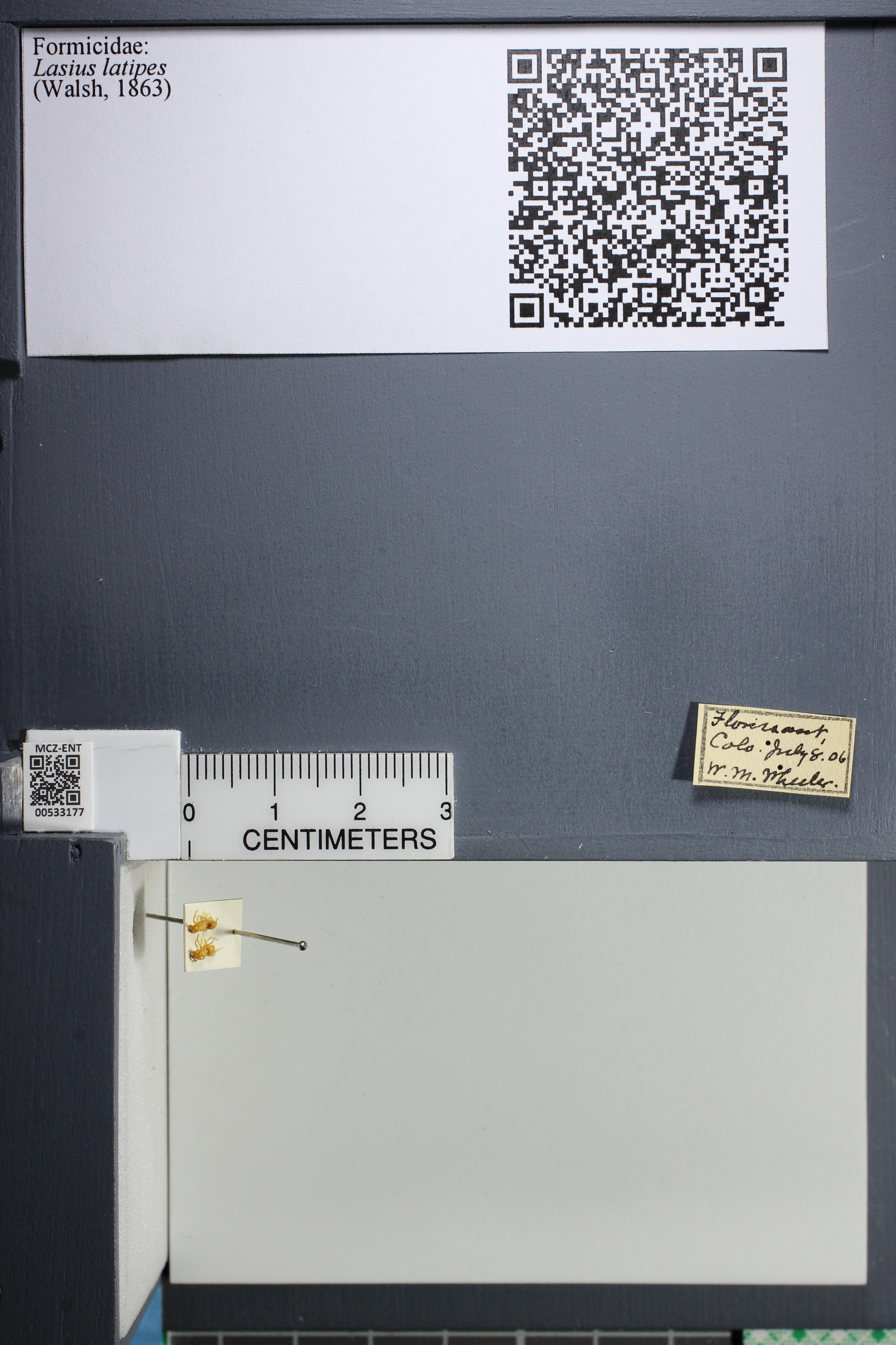 http://mczbase.mcz.harvard.edu/specimen_images/ent-formicidae/datashot/2014_09_10/IMG_305032.JPG