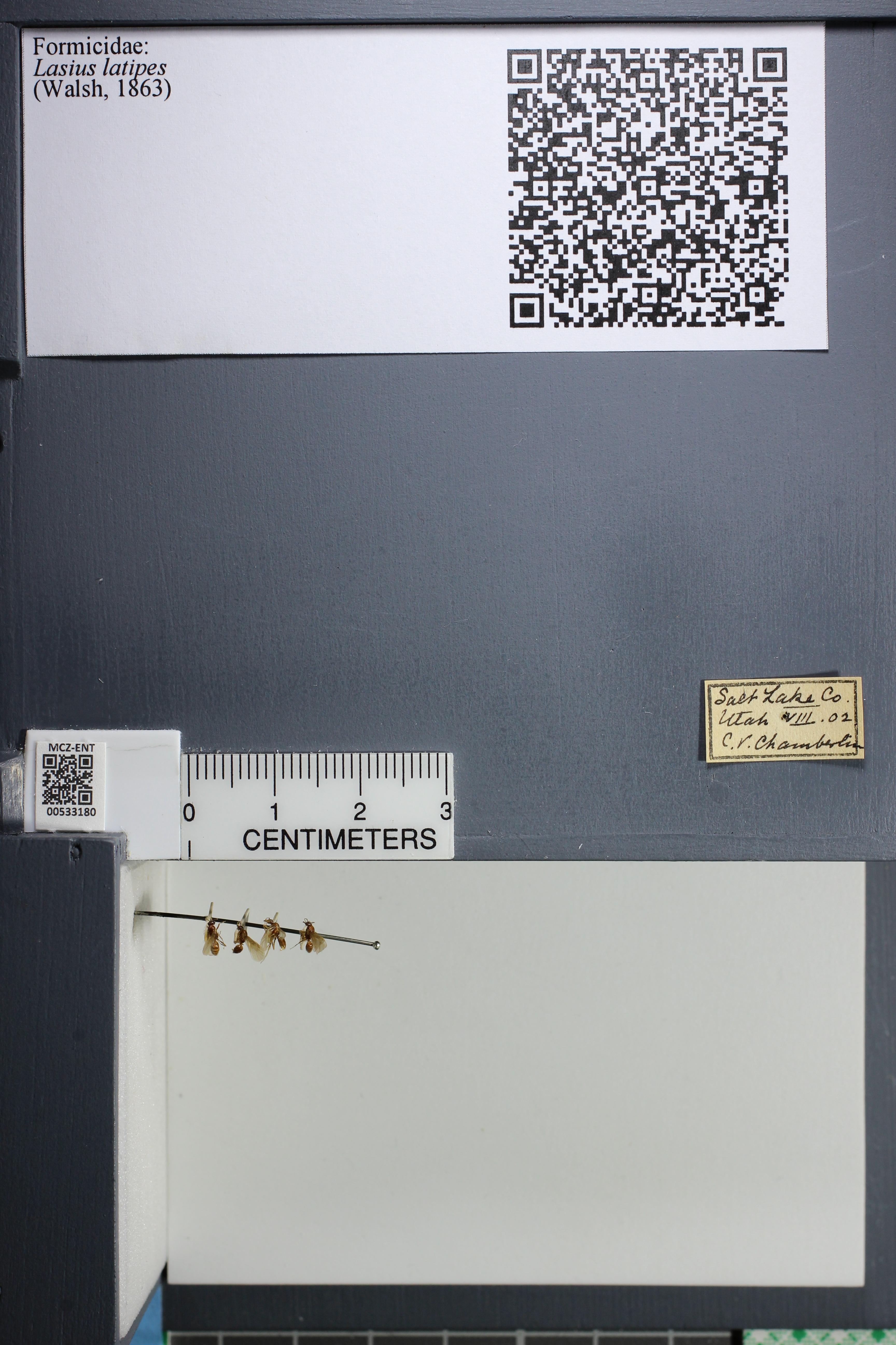 http://mczbase.mcz.harvard.edu/specimen_images/ent-formicidae/datashot/2014_09_10/IMG_305035.JPG