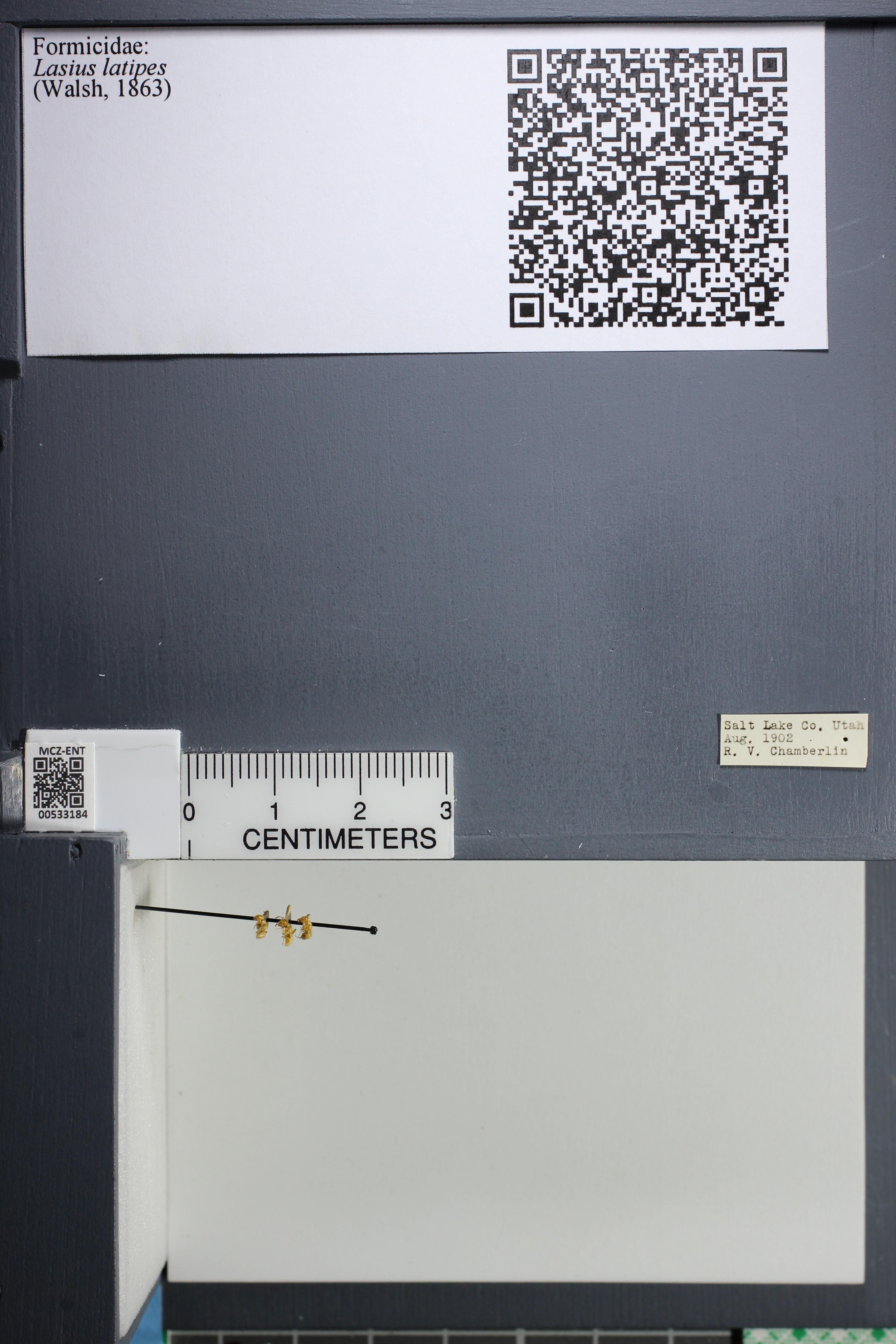http://mczbase.mcz.harvard.edu/specimen_images/ent-formicidae/datashot/2014_09_10/IMG_305039.JPG