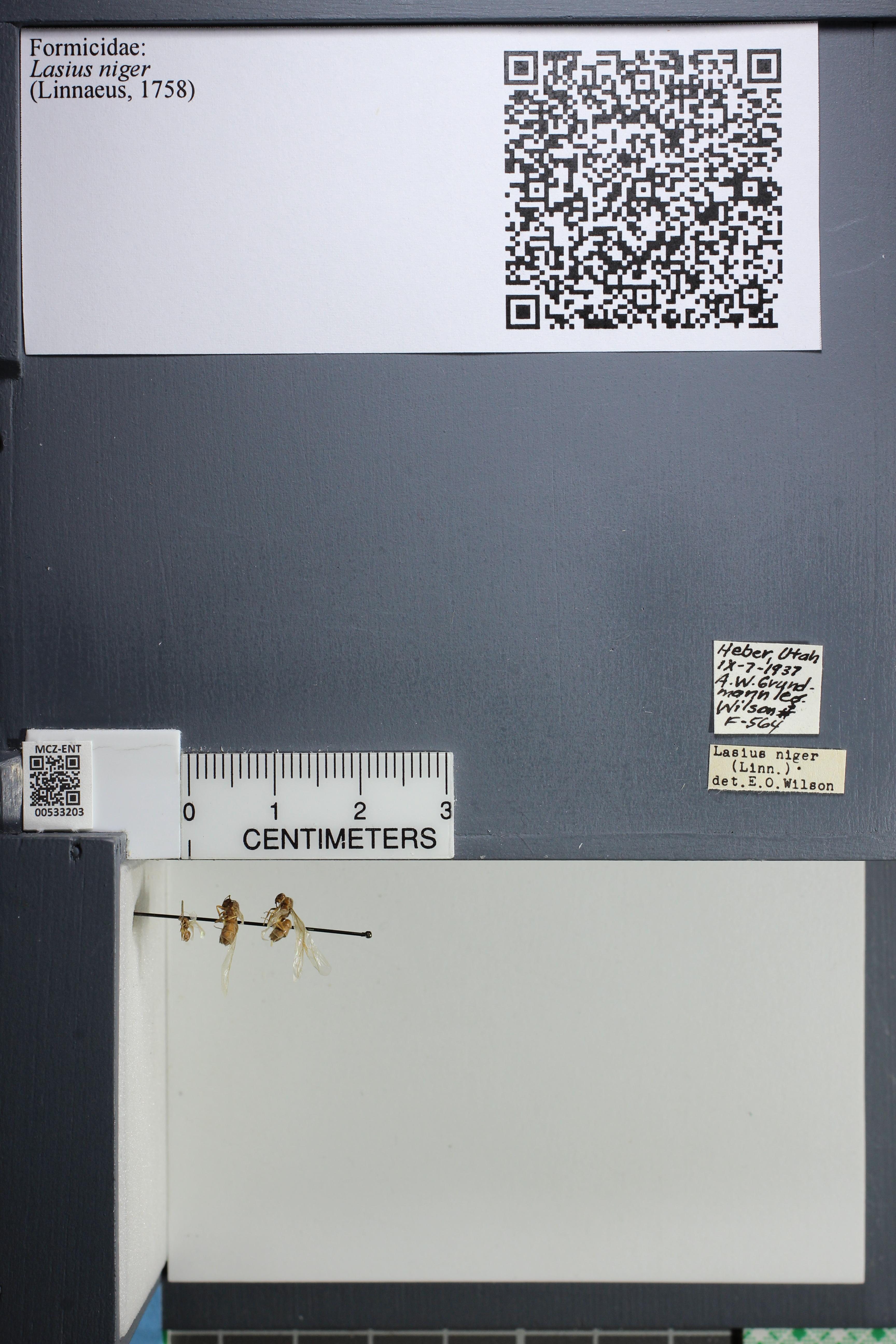 http://mczbase.mcz.harvard.edu/specimen_images/ent-formicidae/datashot/2014_09_11/IMG_305059.JPG