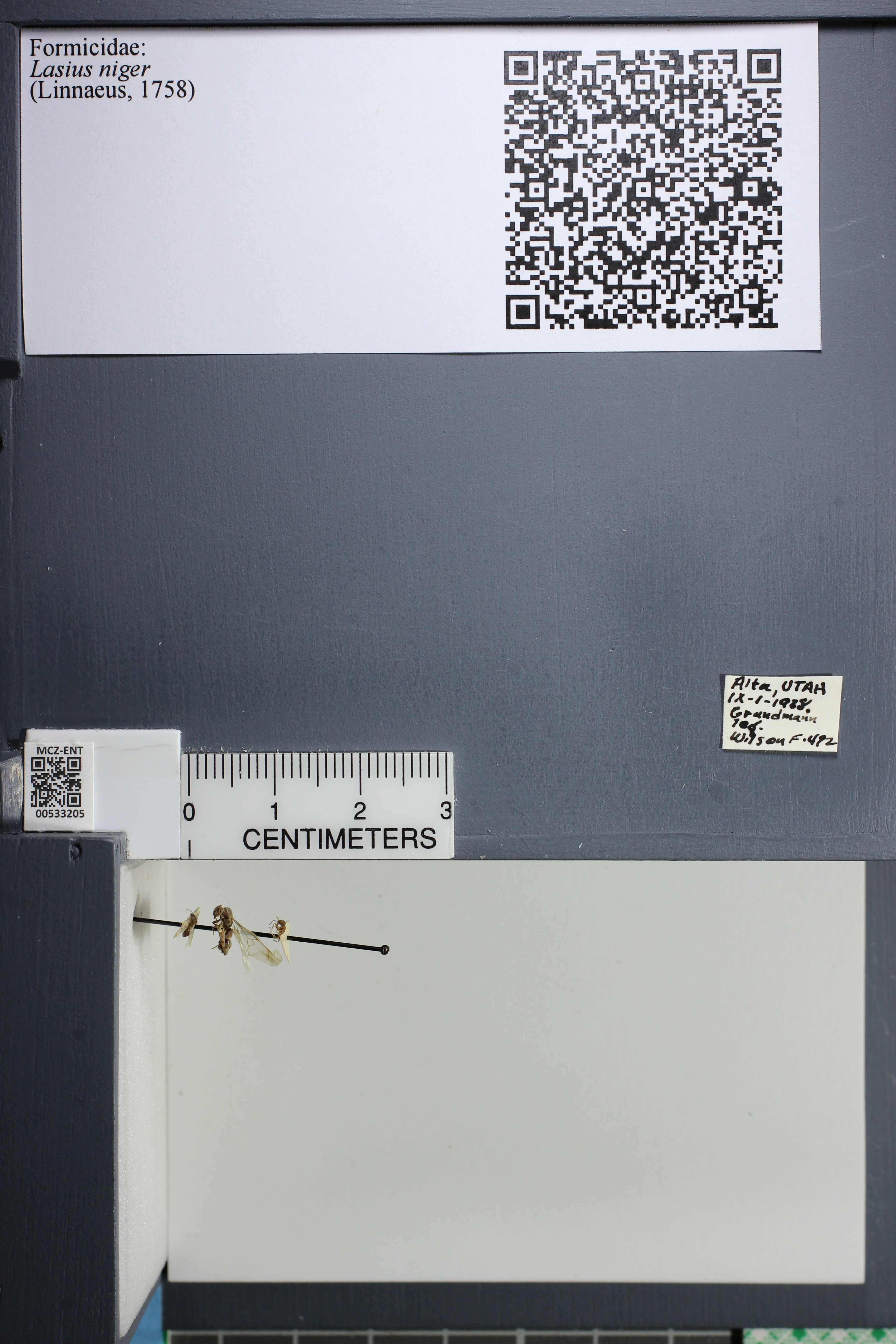 http://mczbase.mcz.harvard.edu/specimen_images/ent-formicidae/datashot/2014_09_11/IMG_305061.JPG