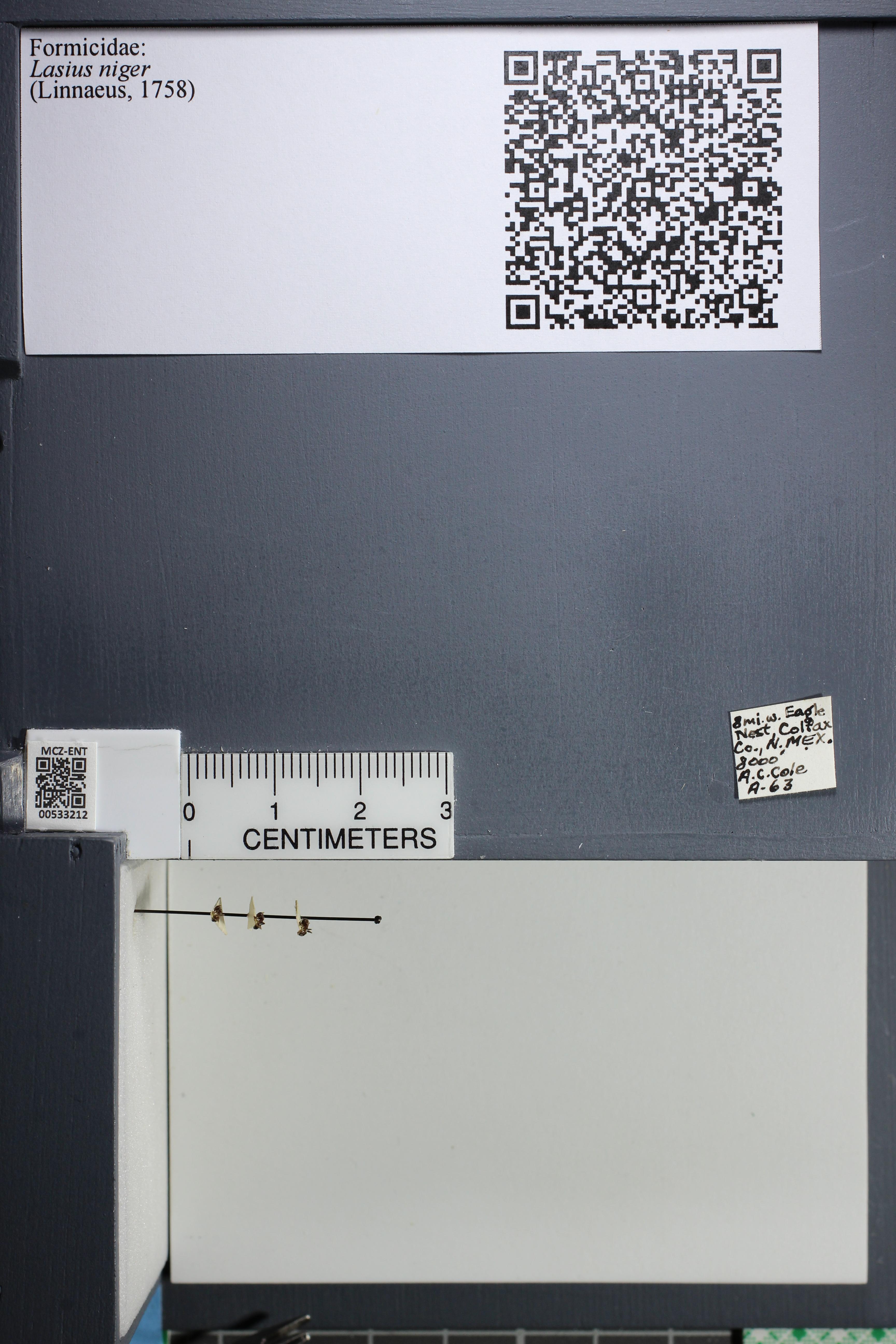 http://mczbase.mcz.harvard.edu/specimen_images/ent-formicidae/datashot/2014_09_11/IMG_305068.JPG