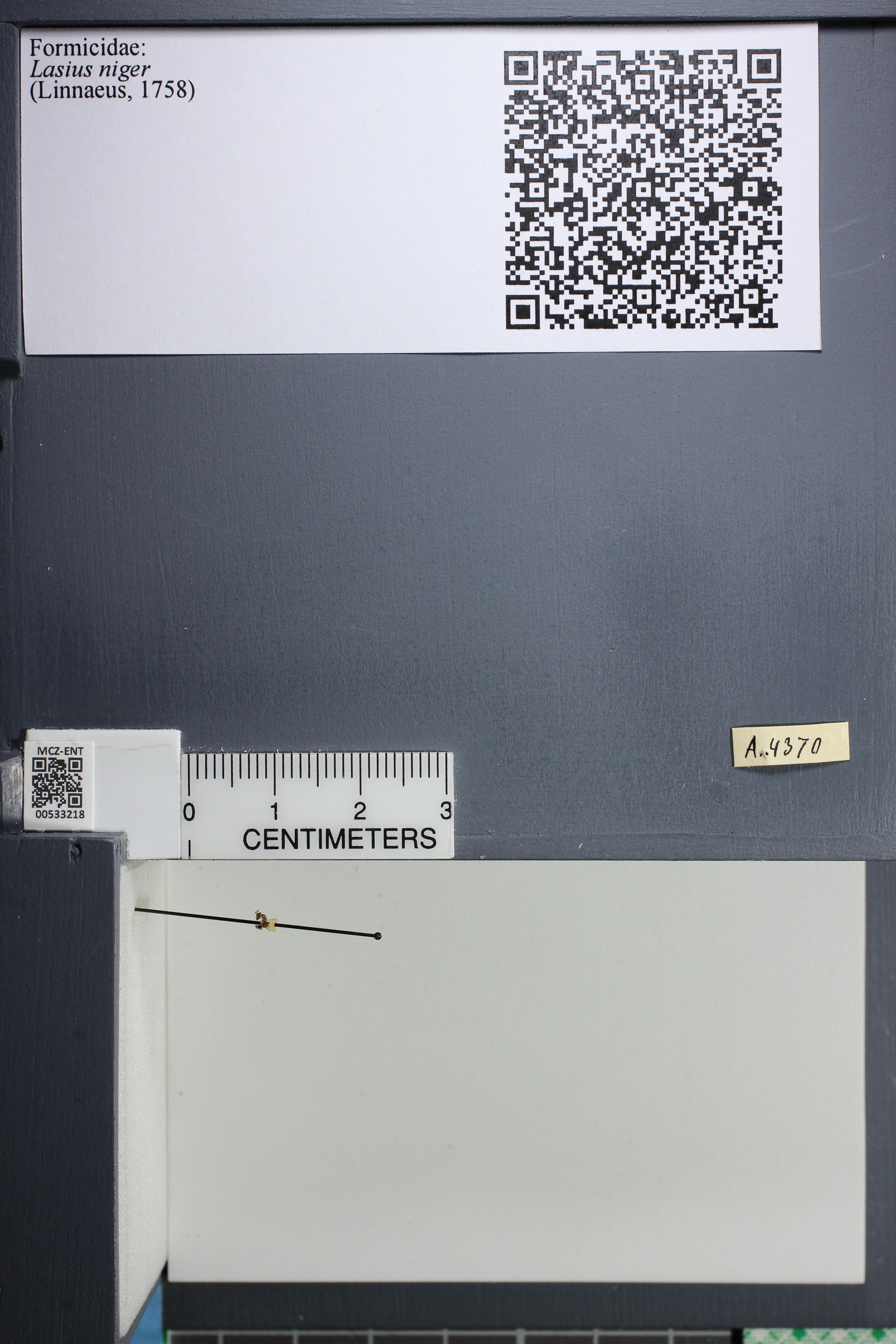 http://mczbase.mcz.harvard.edu/specimen_images/ent-formicidae/datashot/2014_09_11/IMG_305075.JPG