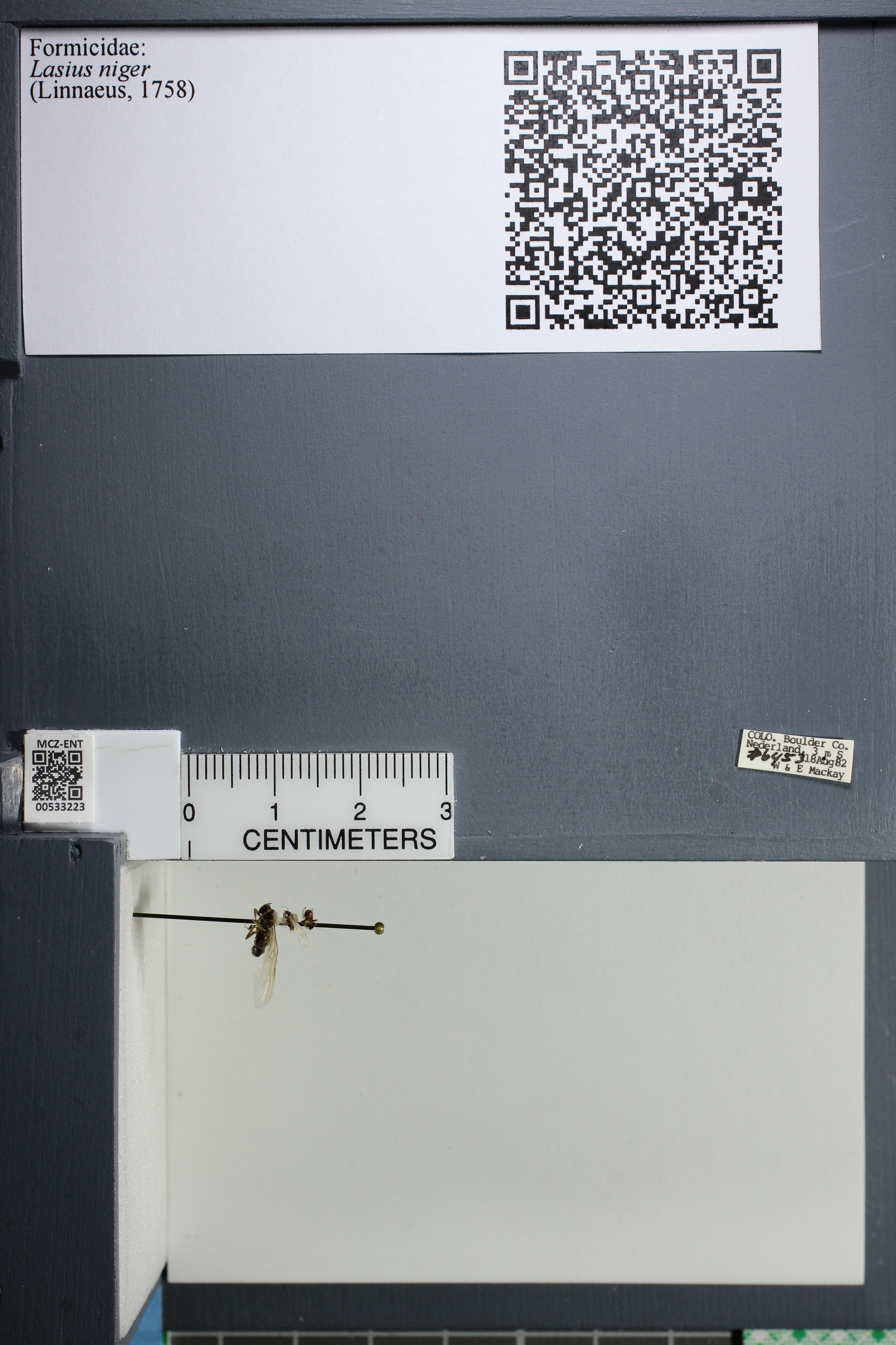 http://mczbase.mcz.harvard.edu/specimen_images/ent-formicidae/datashot/2014_09_11/IMG_305082.JPG