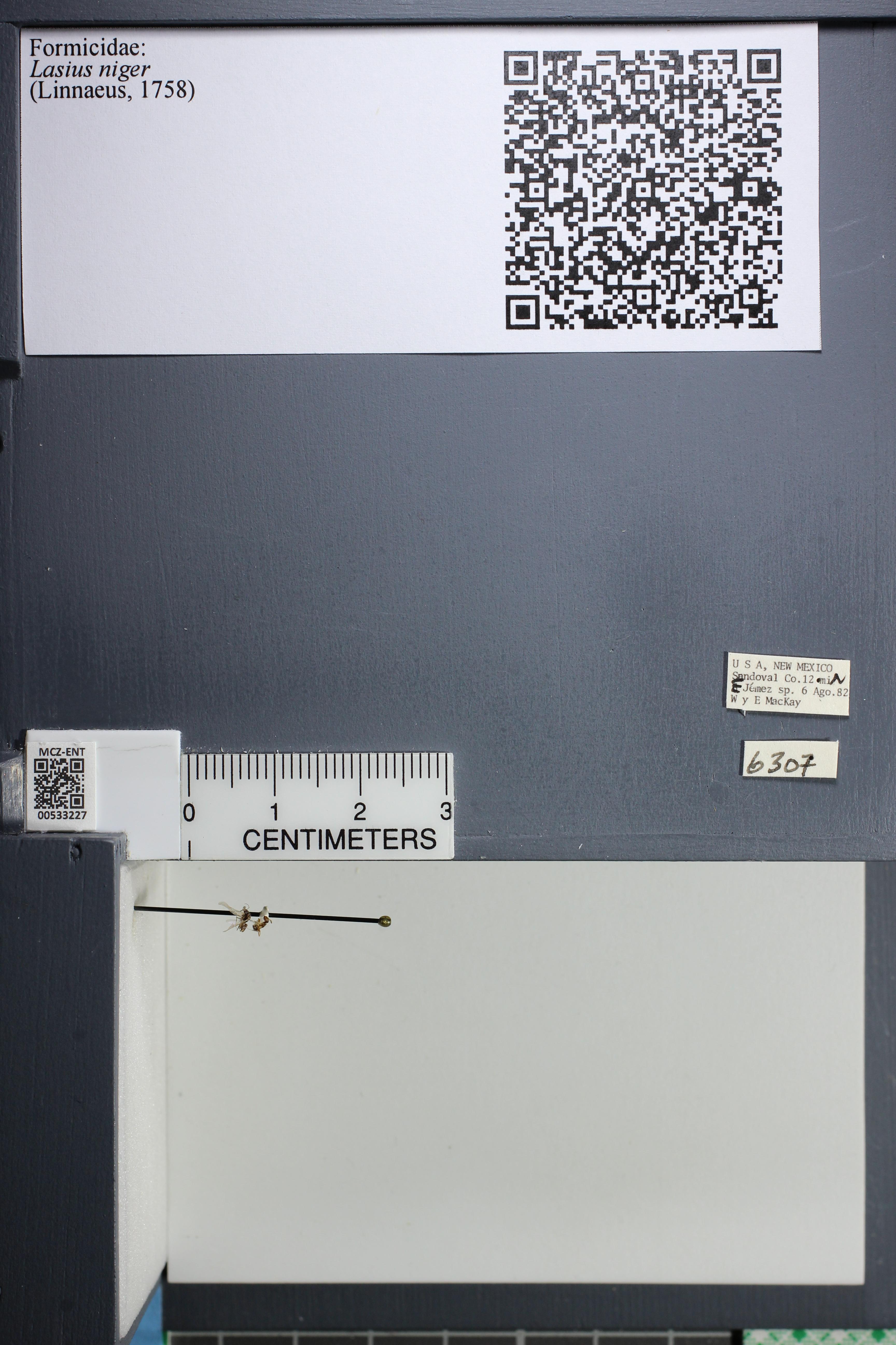 http://mczbase.mcz.harvard.edu/specimen_images/ent-formicidae/datashot/2014_09_11/IMG_305086.JPG