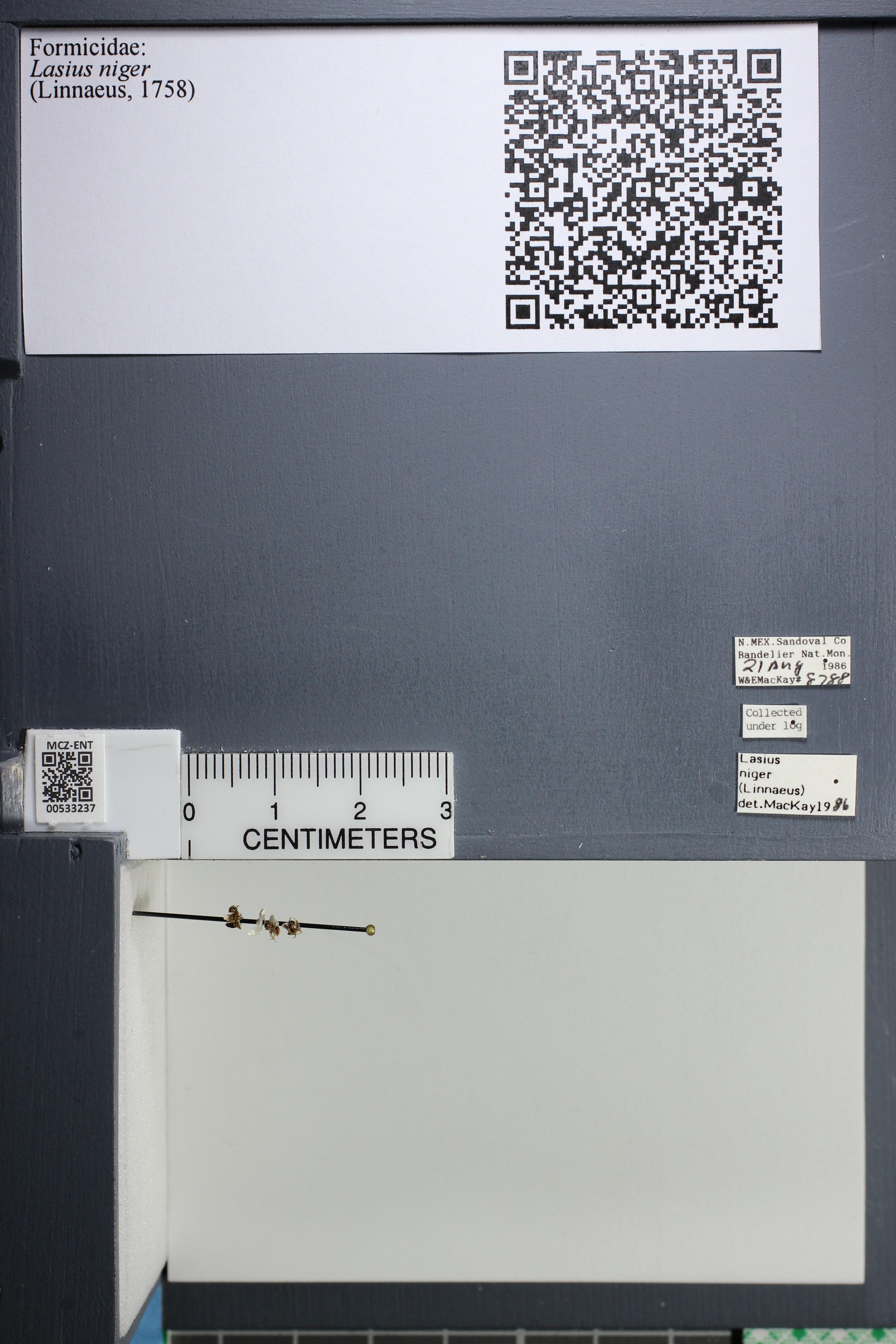 http://mczbase.mcz.harvard.edu/specimen_images/ent-formicidae/datashot/2014_09_11/IMG_305096.JPG