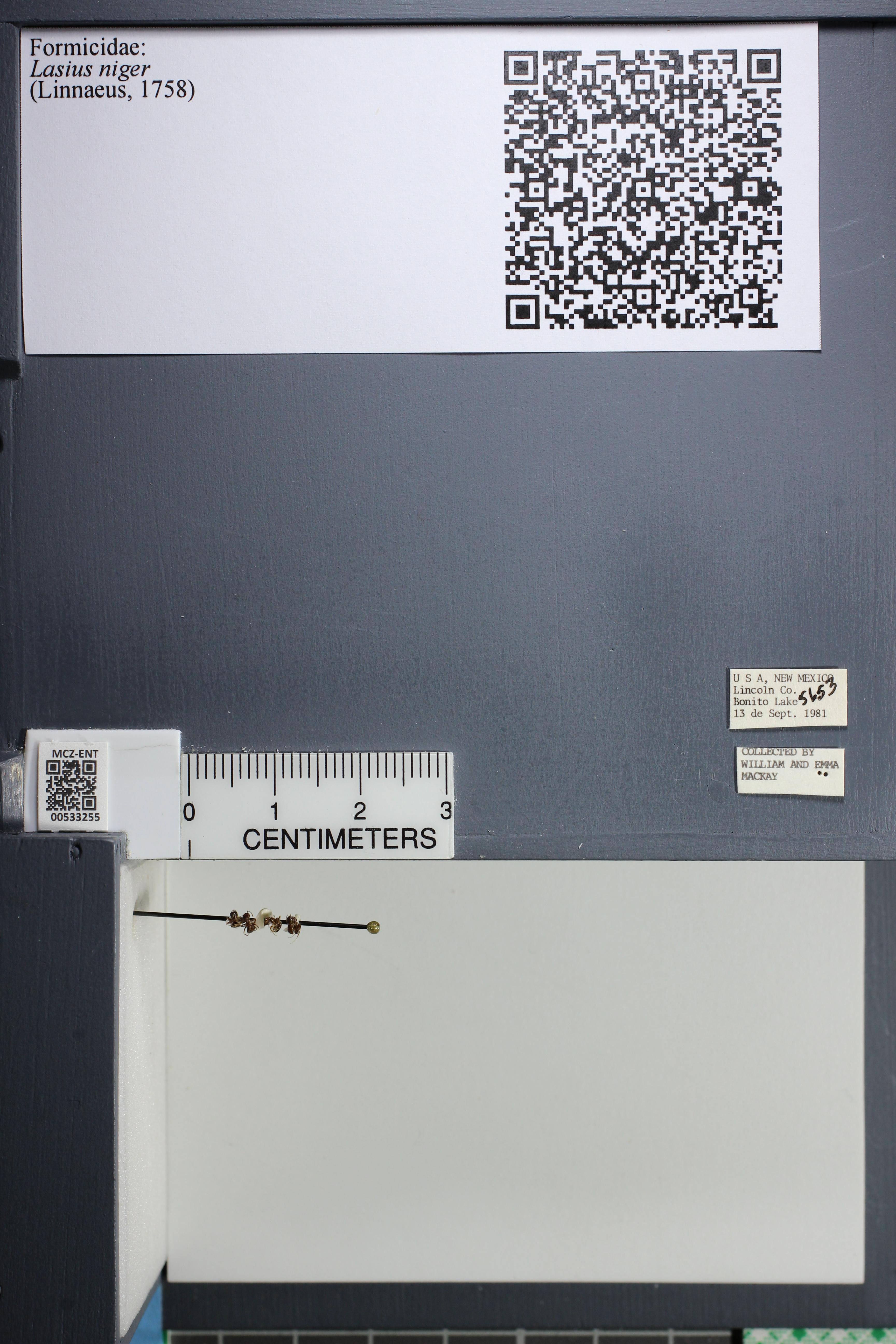 http://mczbase.mcz.harvard.edu/specimen_images/ent-formicidae/datashot/2014_09_11/IMG_305114.JPG