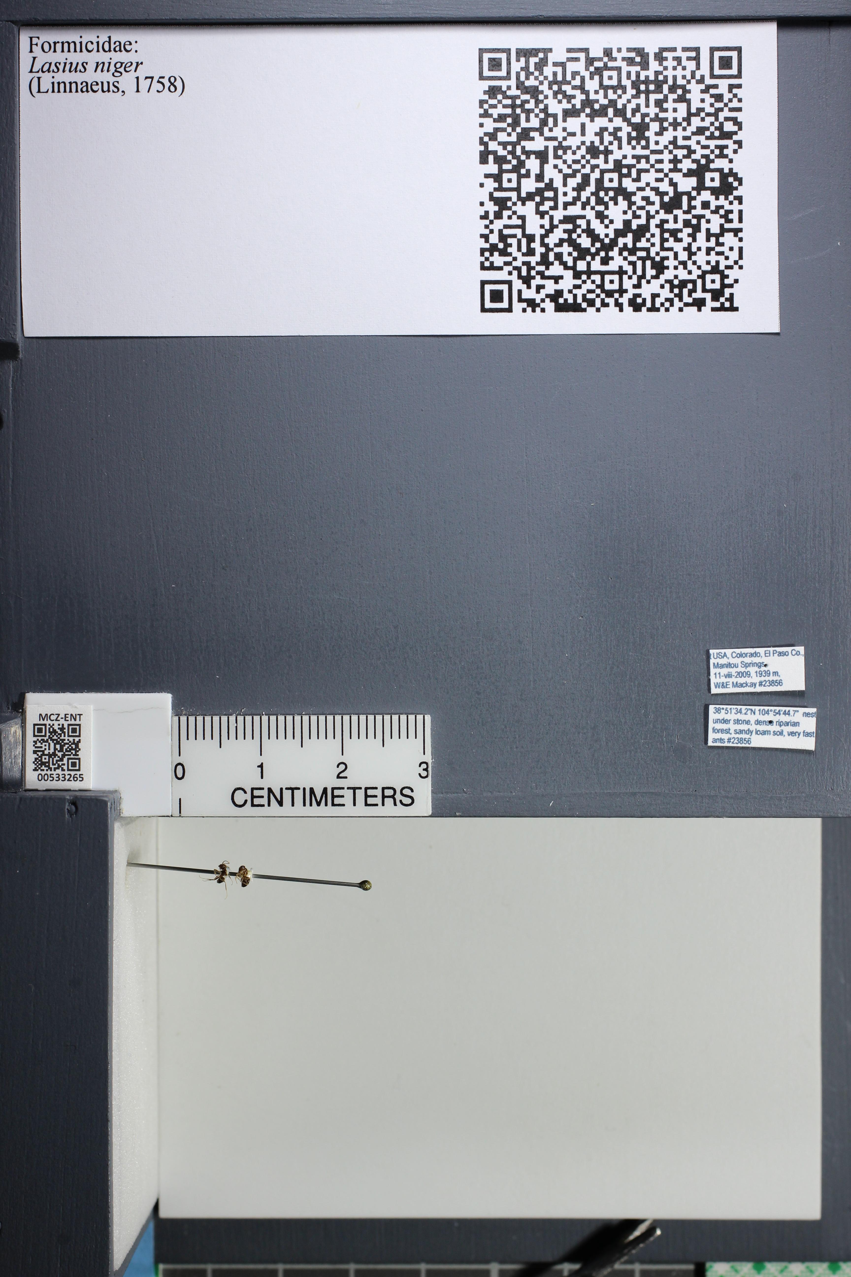 http://mczbase.mcz.harvard.edu/specimen_images/ent-formicidae/datashot/2014_09_11/IMG_305124.JPG