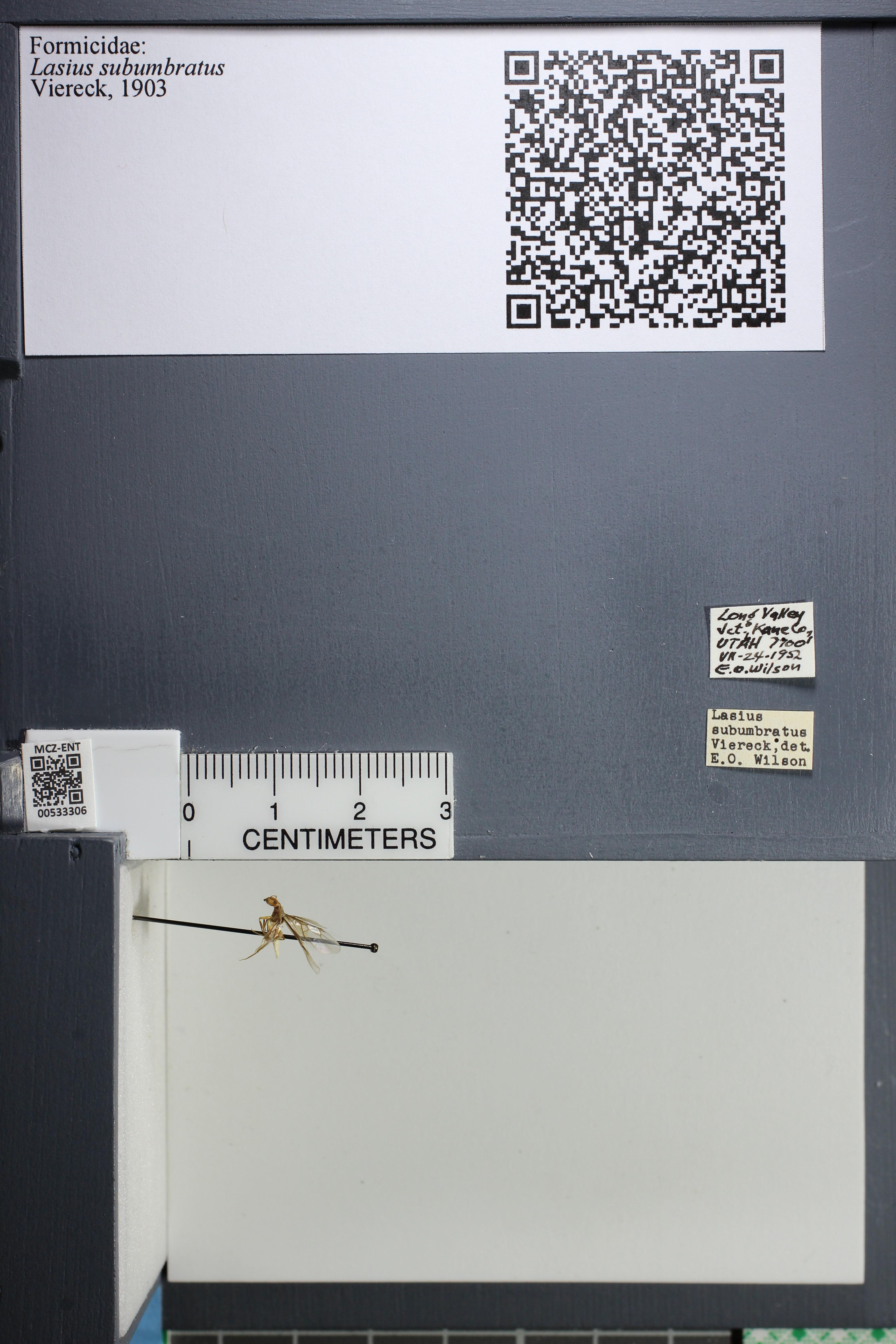 http://mczbase.mcz.harvard.edu/specimen_images/ent-formicidae/datashot/2014_09_11/IMG_305165.JPG