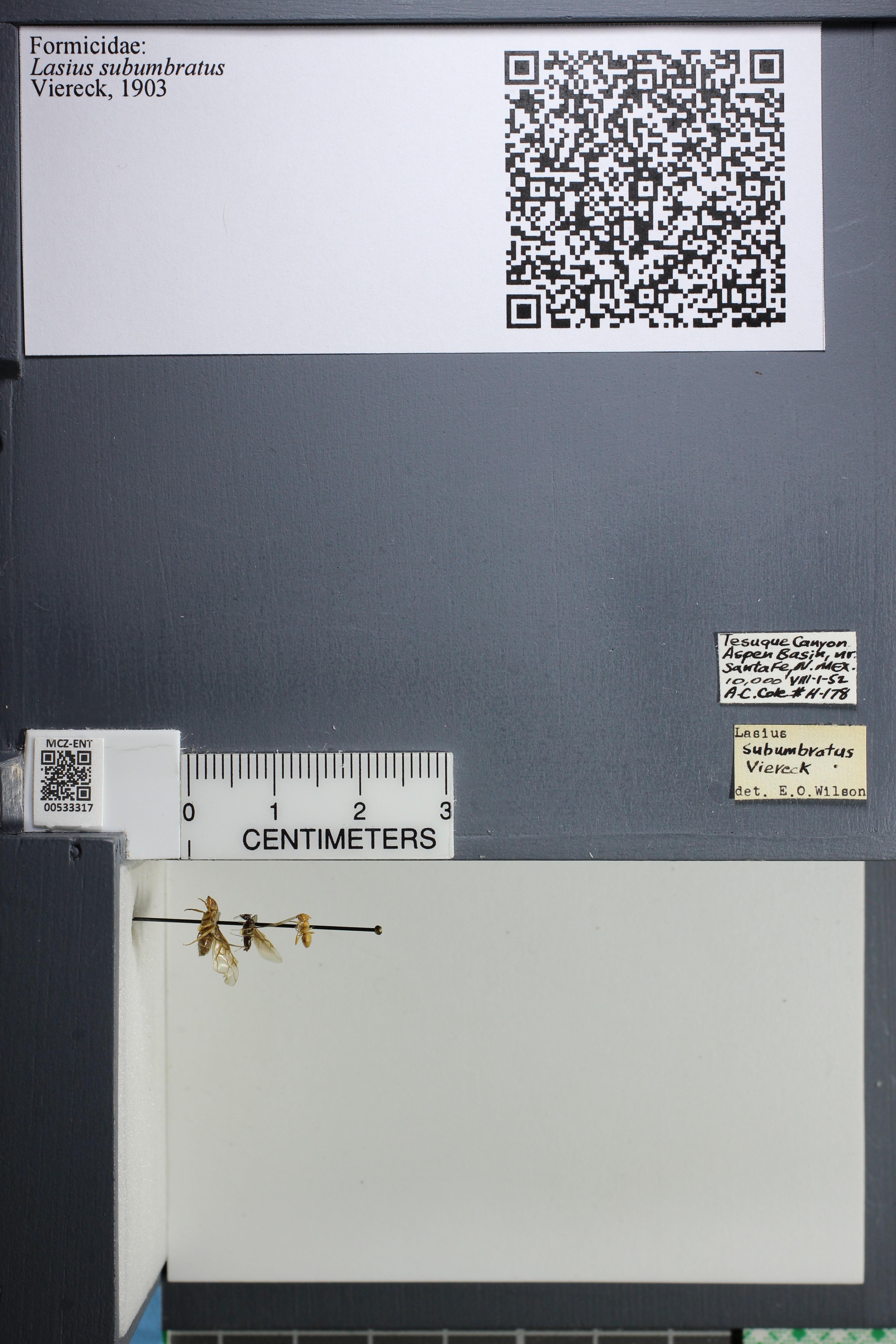 http://mczbase.mcz.harvard.edu/specimen_images/ent-formicidae/datashot/2014_09_11/IMG_305176.JPG
