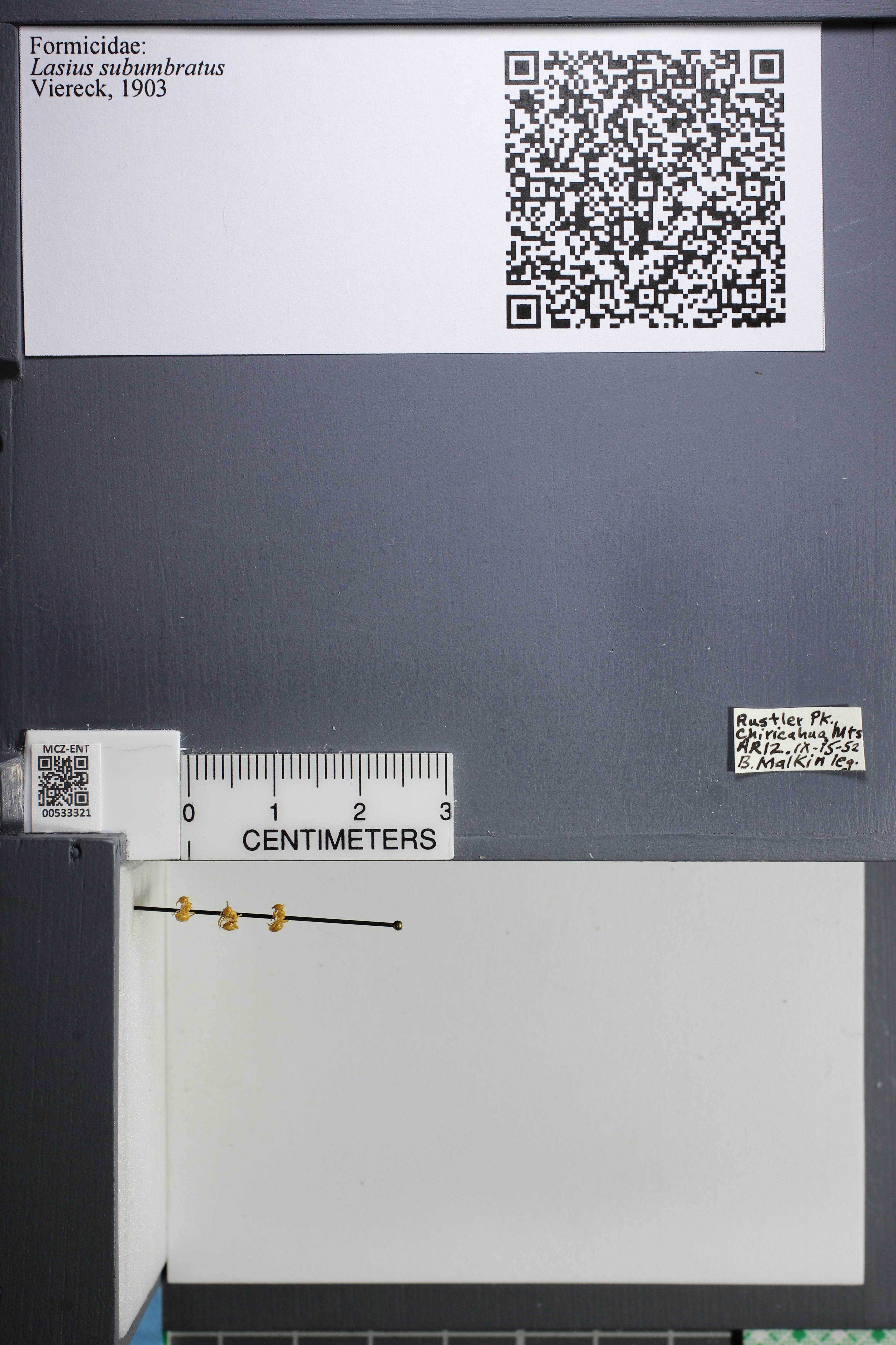 http://mczbase.mcz.harvard.edu/specimen_images/ent-formicidae/datashot/2014_09_11/IMG_305180.JPG
