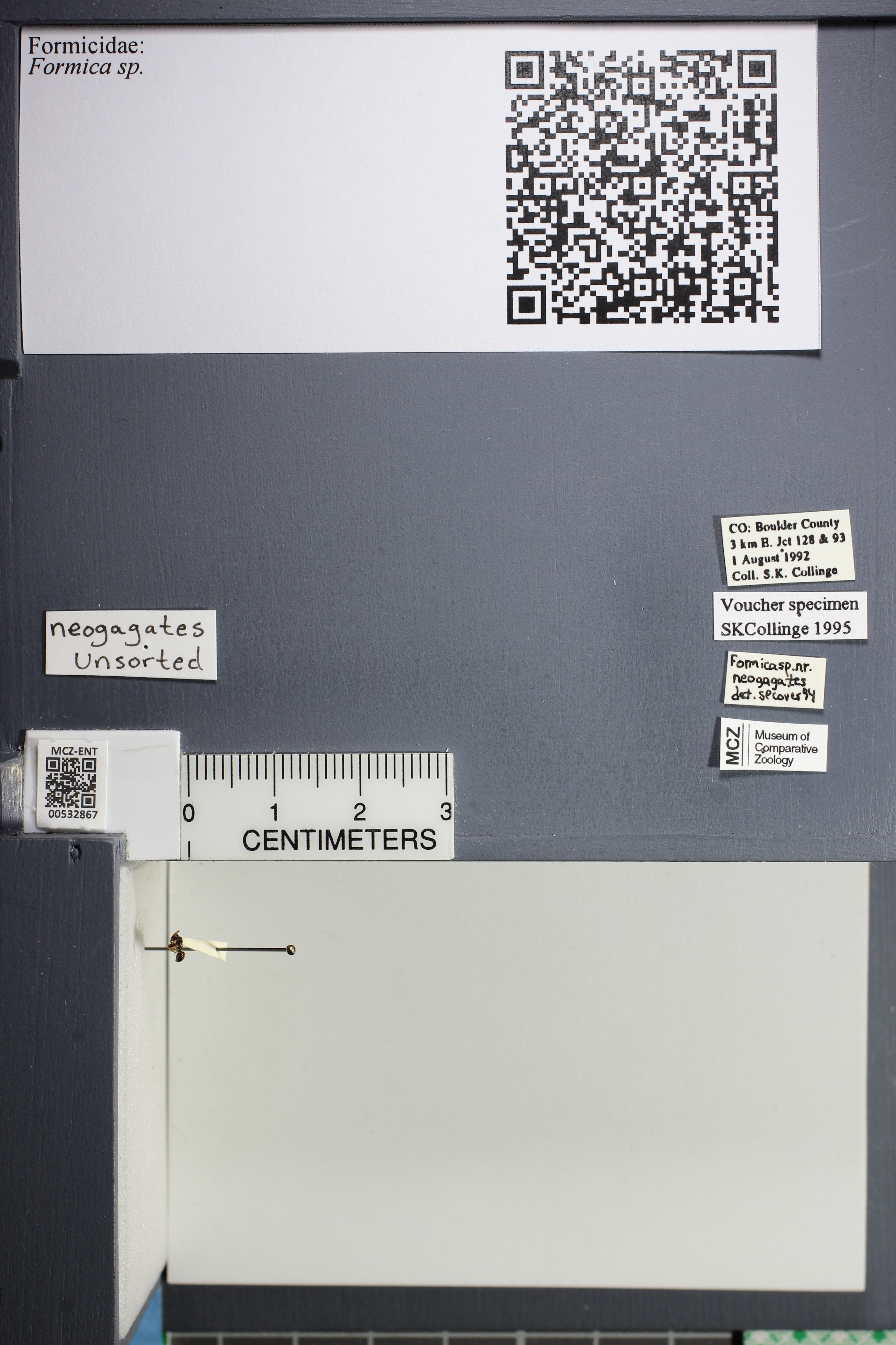 http://mczbase.mcz.harvard.edu/specimen_images/ent-formicidae/datashot/2014_09_21/2014_09_08/IMG_304684.JPG