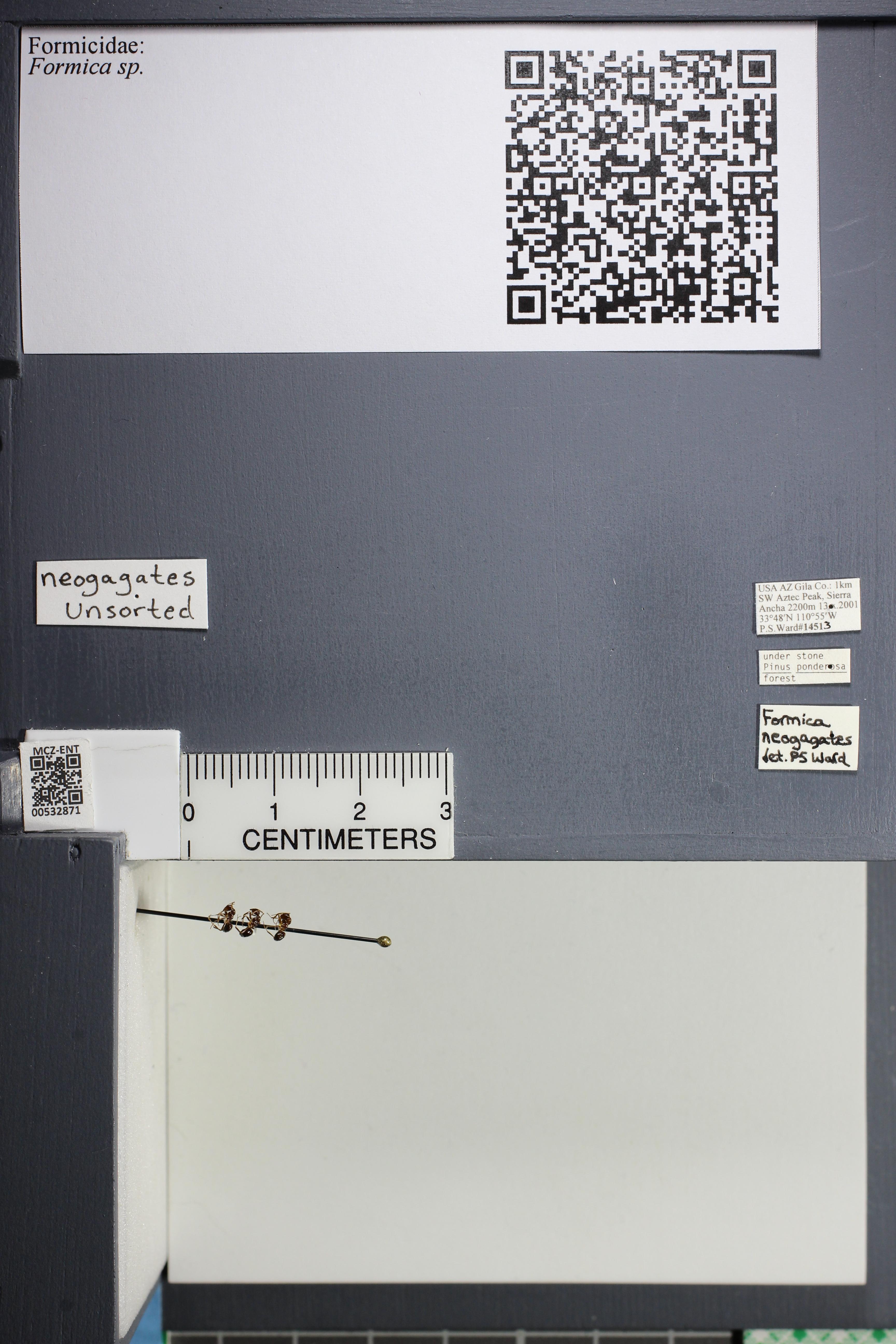 http://mczbase.mcz.harvard.edu/specimen_images/ent-formicidae/datashot/2014_09_21/2014_09_08/IMG_304688.JPG