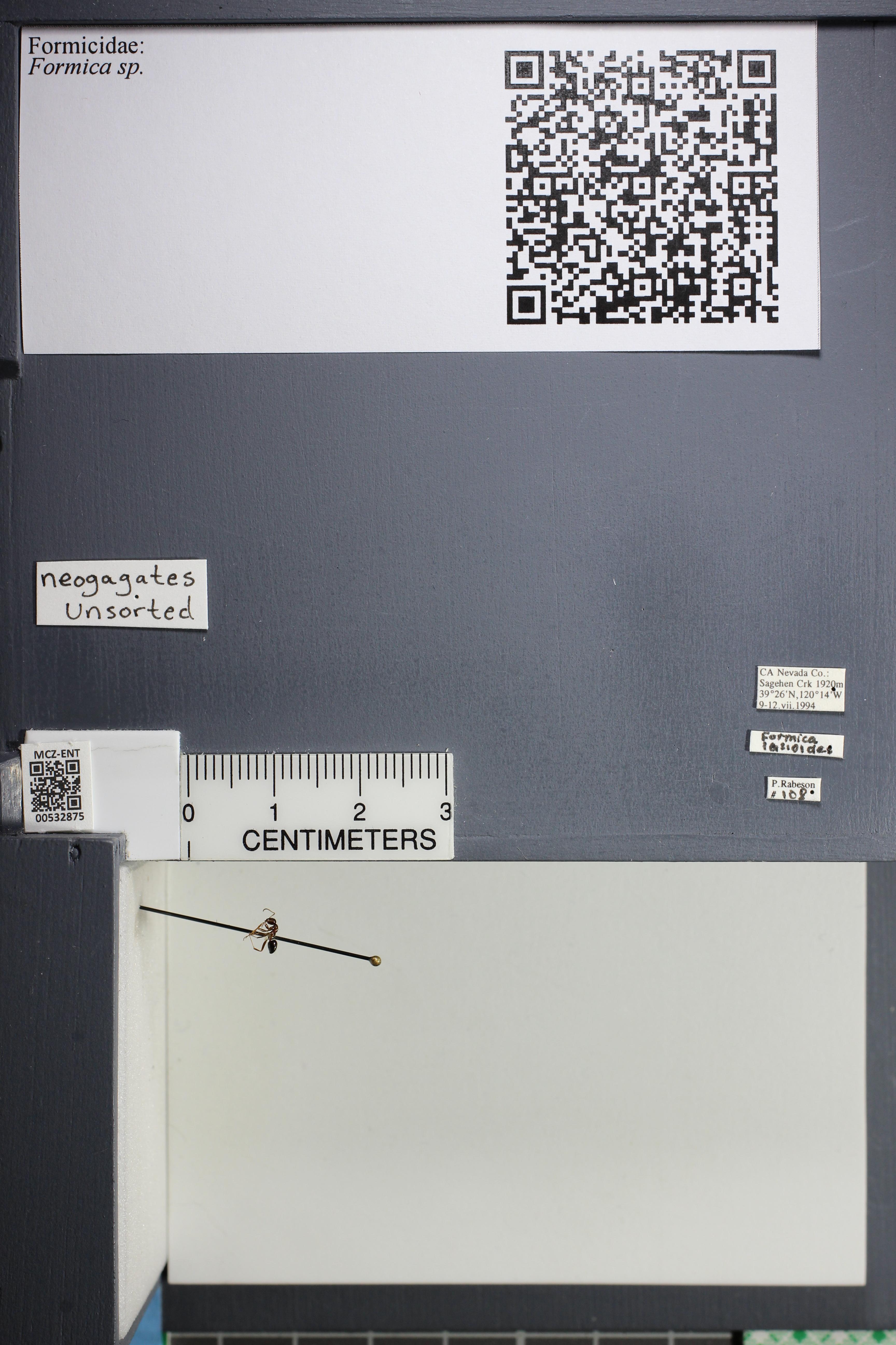 http://mczbase.mcz.harvard.edu/specimen_images/ent-formicidae/datashot/2014_09_21/2014_09_08/IMG_304692.JPG