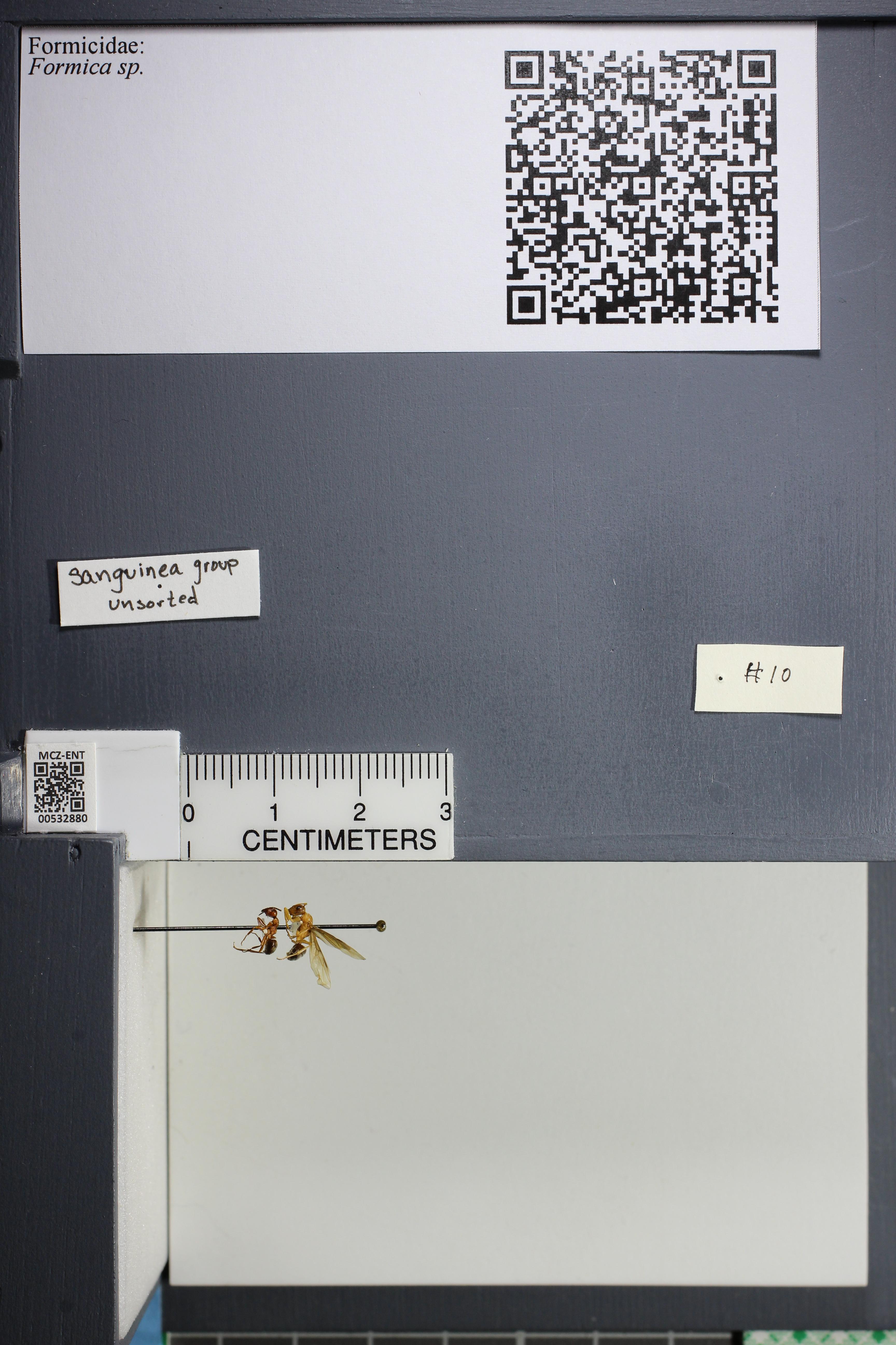 http://mczbase.mcz.harvard.edu/specimen_images/ent-formicidae/datashot/2014_09_21/2014_09_08/IMG_304698.JPG