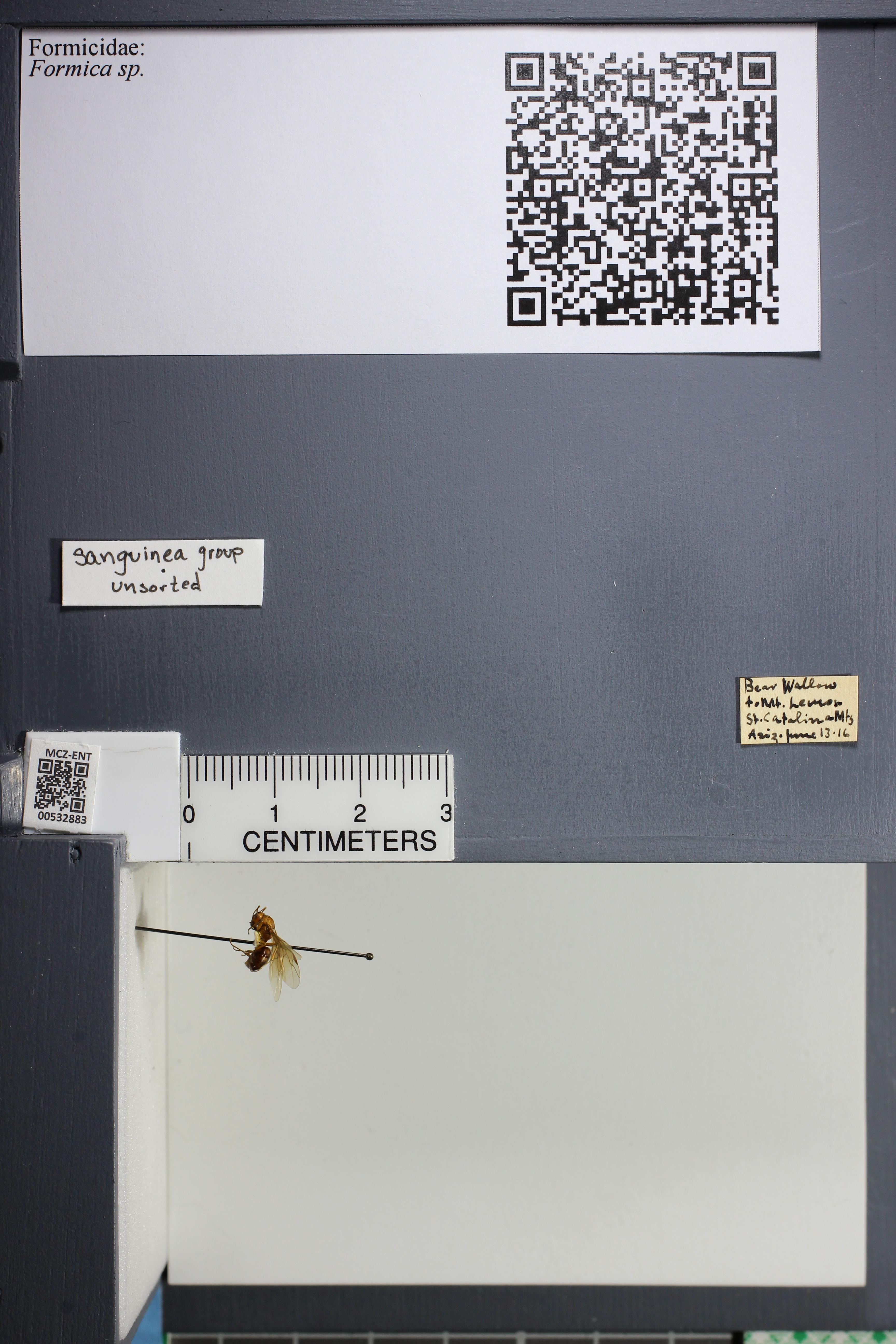 http://mczbase.mcz.harvard.edu/specimen_images/ent-formicidae/datashot/2014_09_21/2014_09_08/IMG_304703.JPG