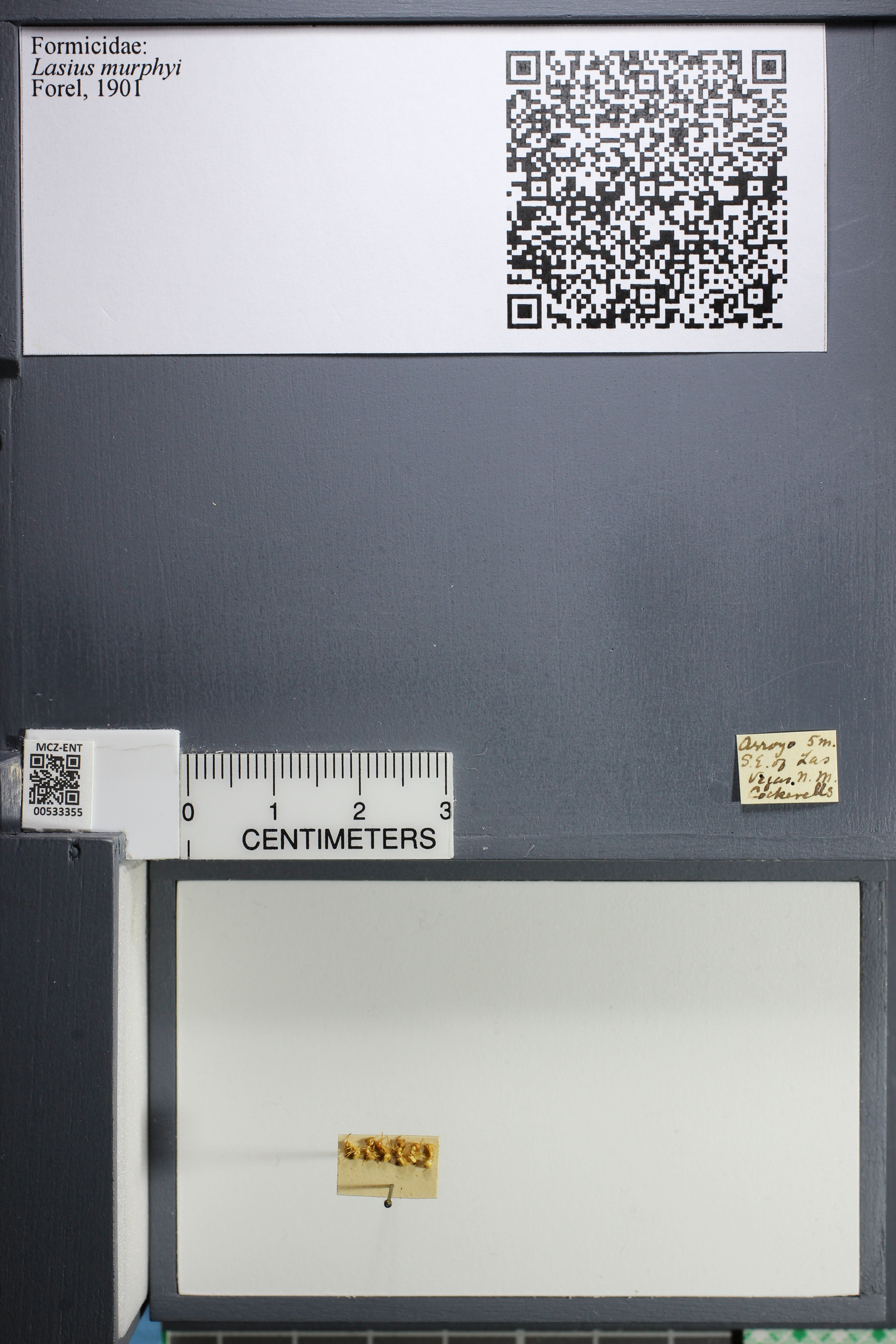http://mczbase.mcz.harvard.edu/specimen_images/ent-formicidae/datashot/2014_09_23/IMG_305231.JPG