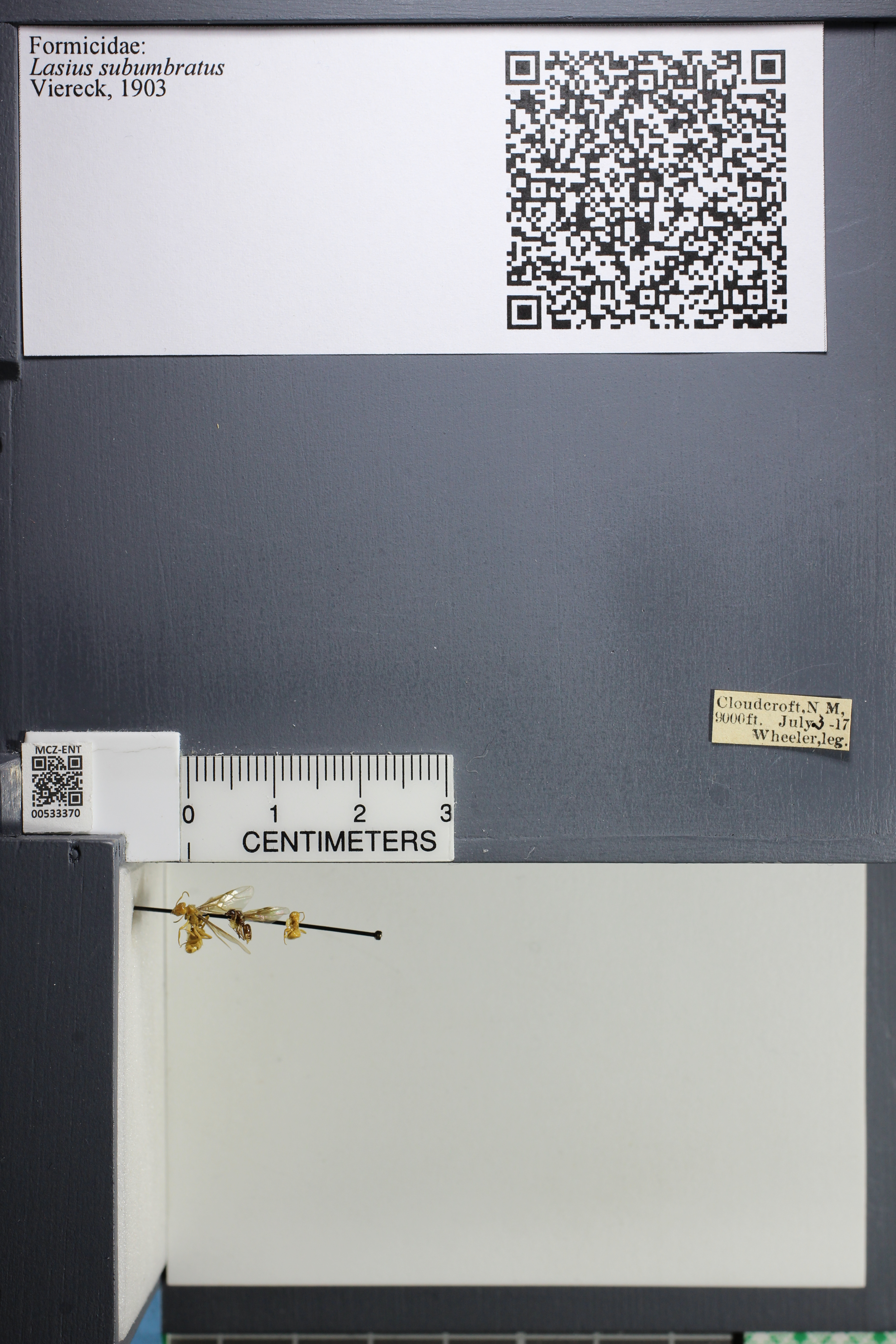 http://mczbase.mcz.harvard.edu/specimen_images/ent-formicidae/datashot/2014_09_23/IMG_305237.JPG