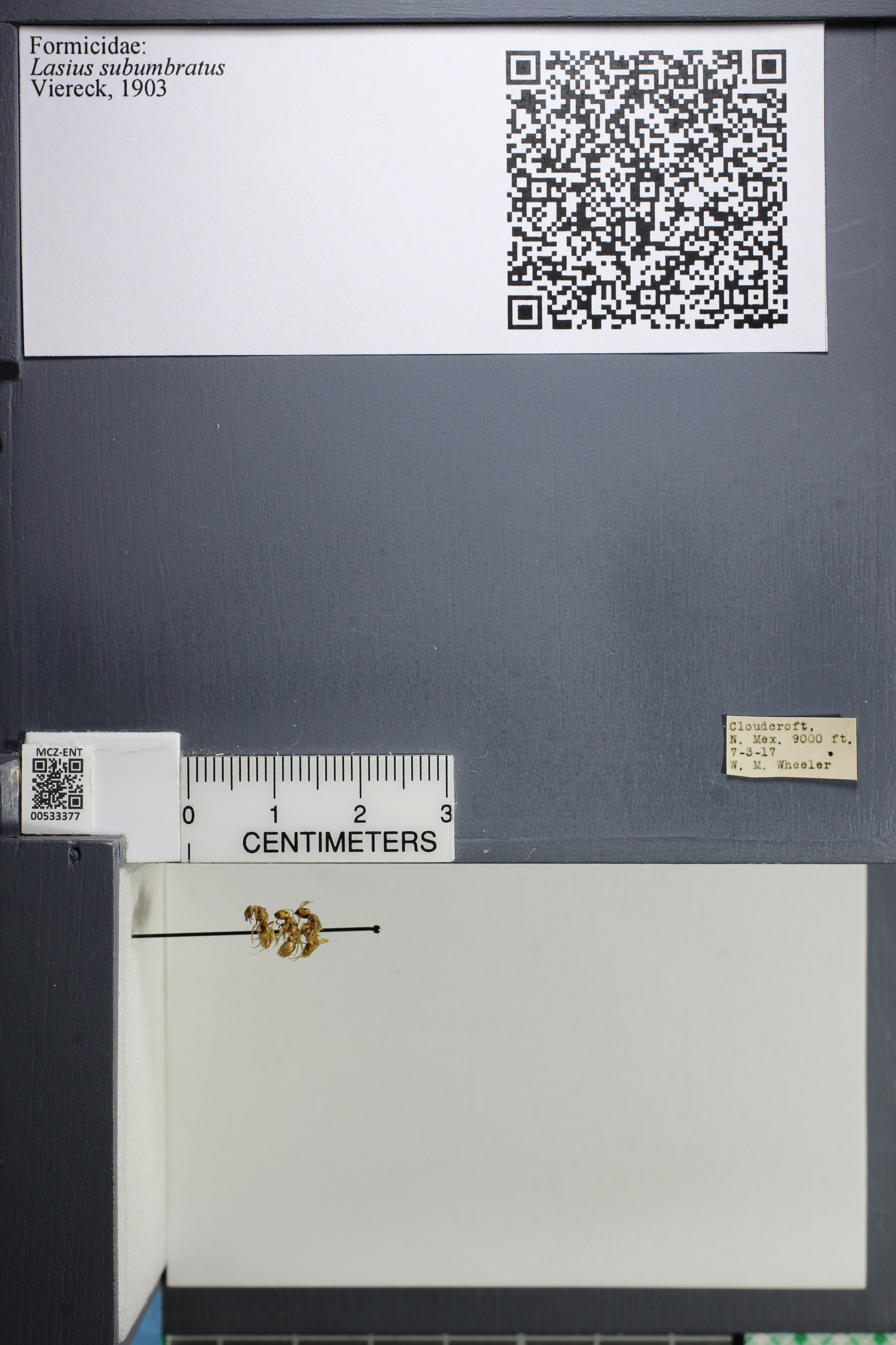 http://mczbase.mcz.harvard.edu/specimen_images/ent-formicidae/datashot/2014_09_23/IMG_305244.JPG