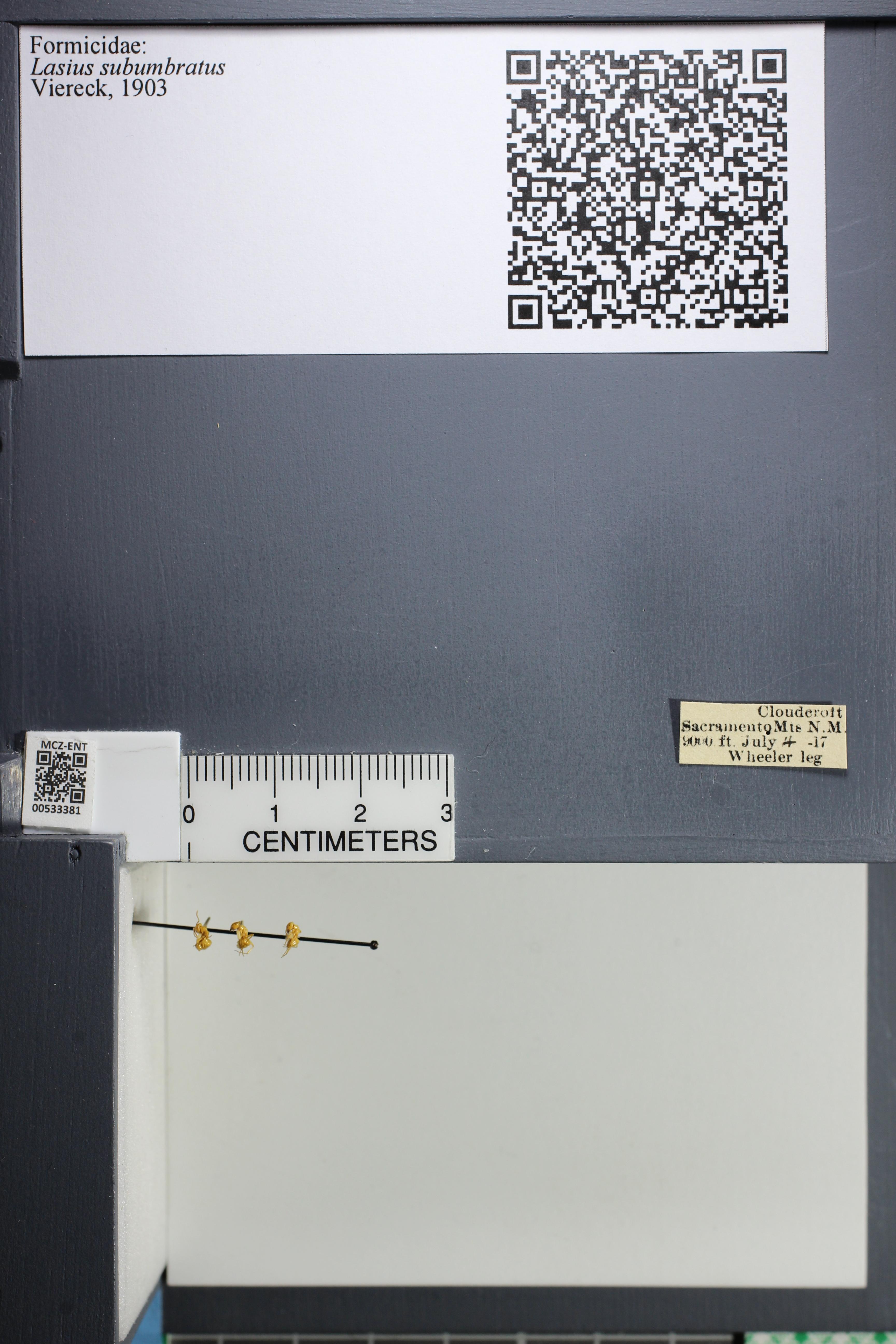 http://mczbase.mcz.harvard.edu/specimen_images/ent-formicidae/datashot/2014_09_23/IMG_305248.JPG