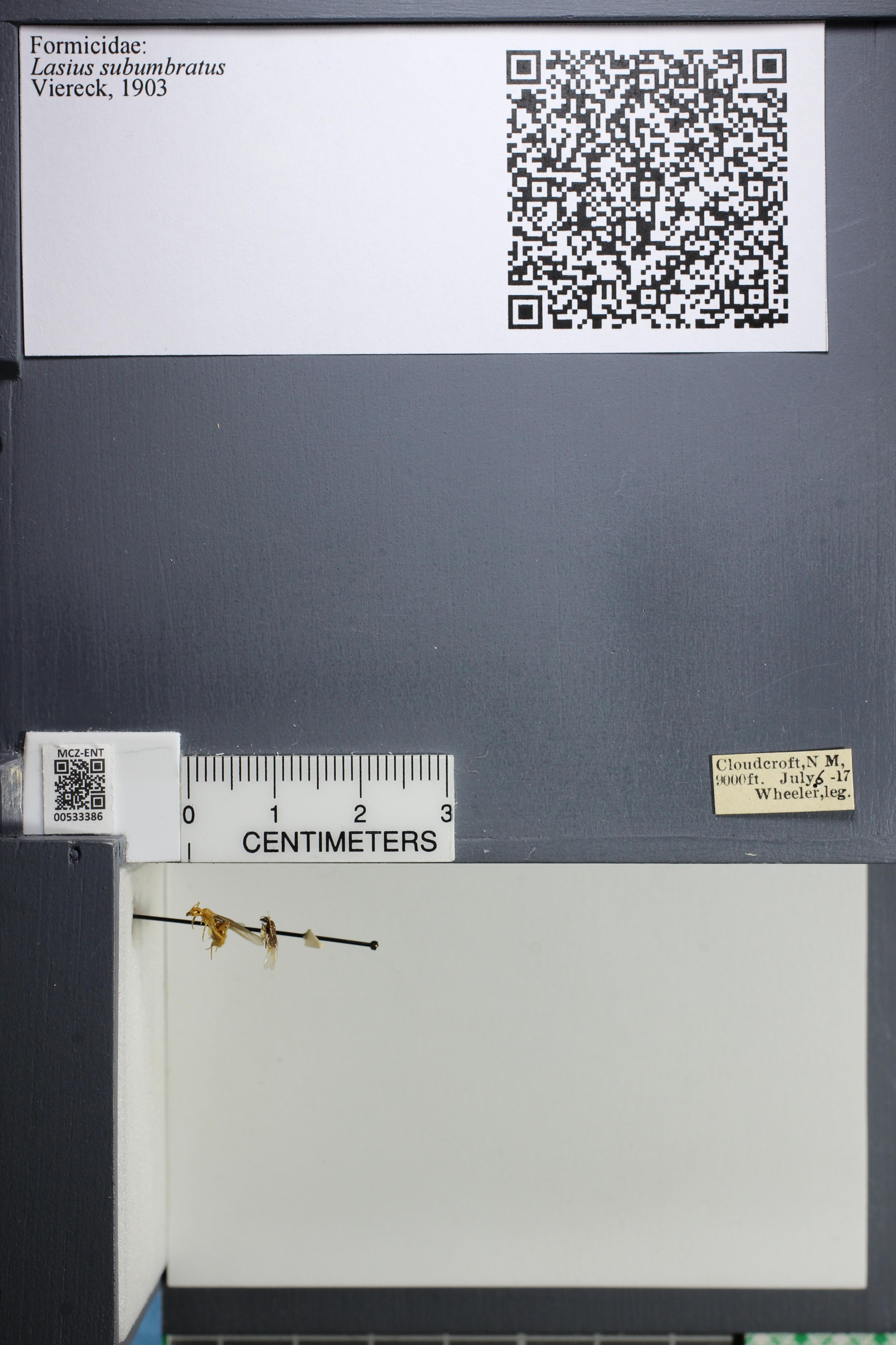 http://mczbase.mcz.harvard.edu/specimen_images/ent-formicidae/datashot/2014_09_23/IMG_305254.JPG