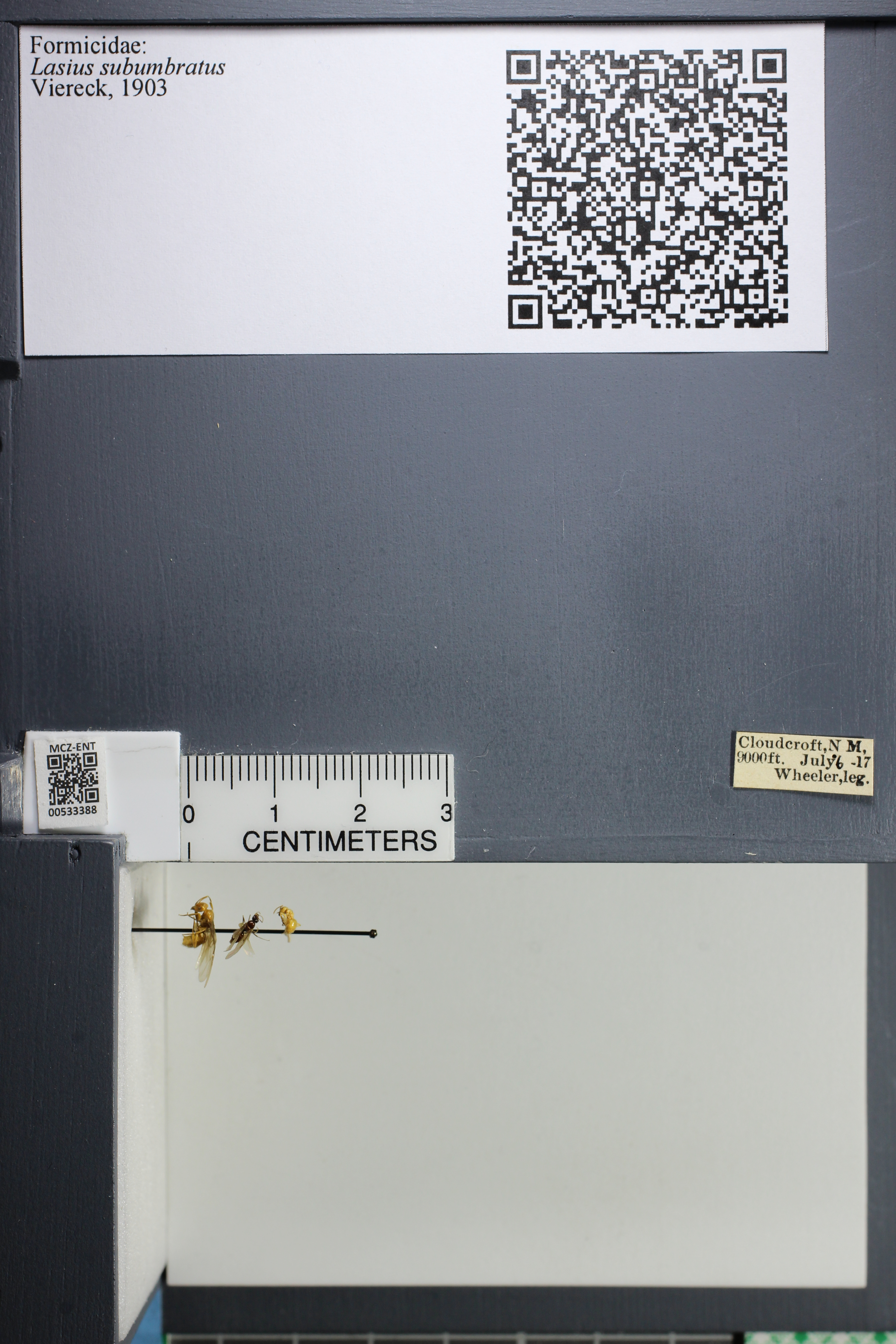 http://mczbase.mcz.harvard.edu/specimen_images/ent-formicidae/datashot/2014_09_23/IMG_305256.JPG