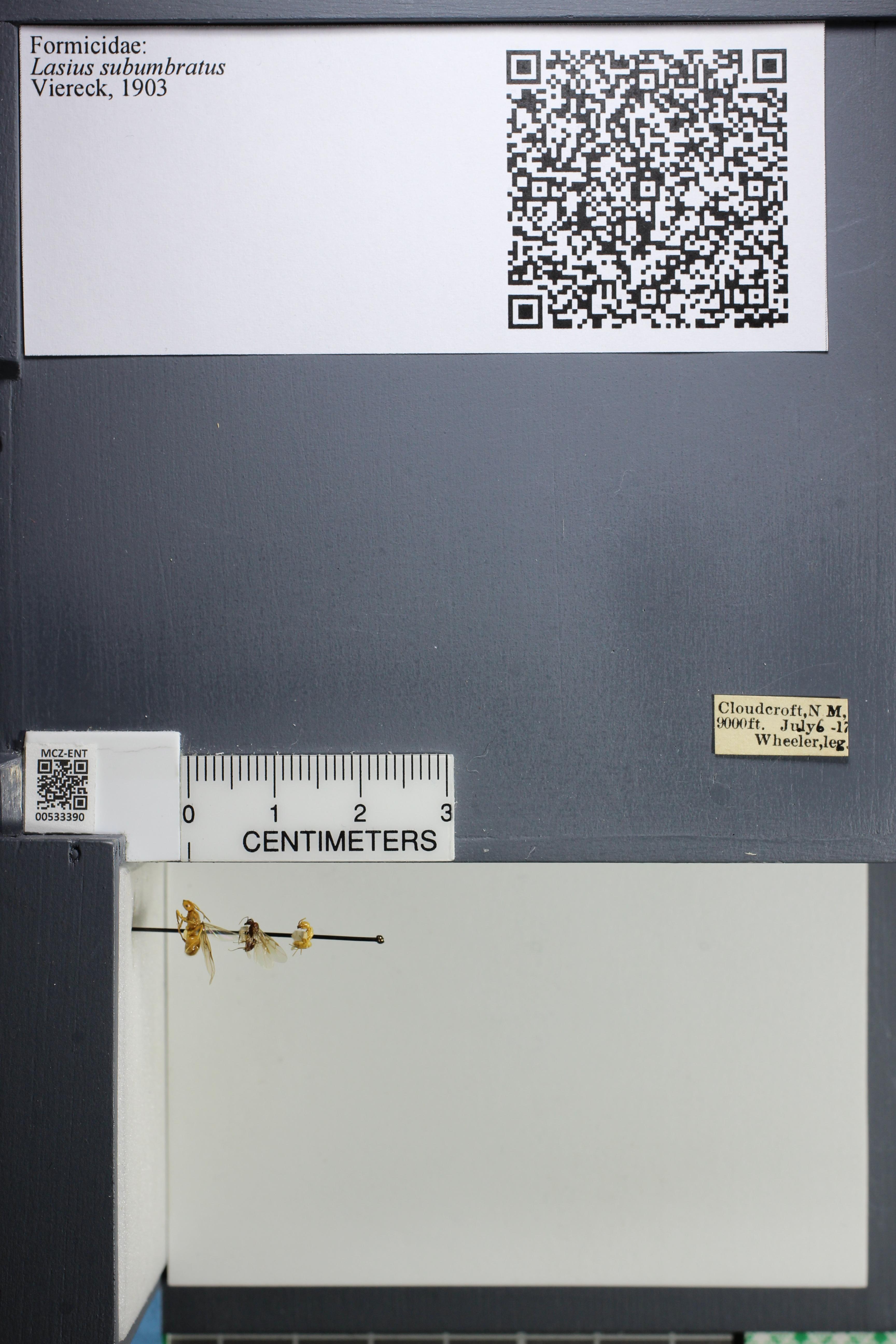 http://mczbase.mcz.harvard.edu/specimen_images/ent-formicidae/datashot/2014_09_23/IMG_305258.JPG